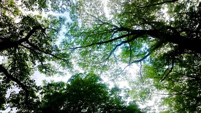 見上げる雑木林