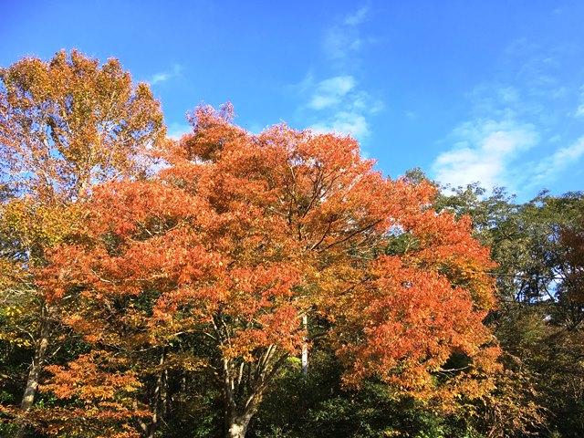 富士市立少年自然の家 紅葉写真
