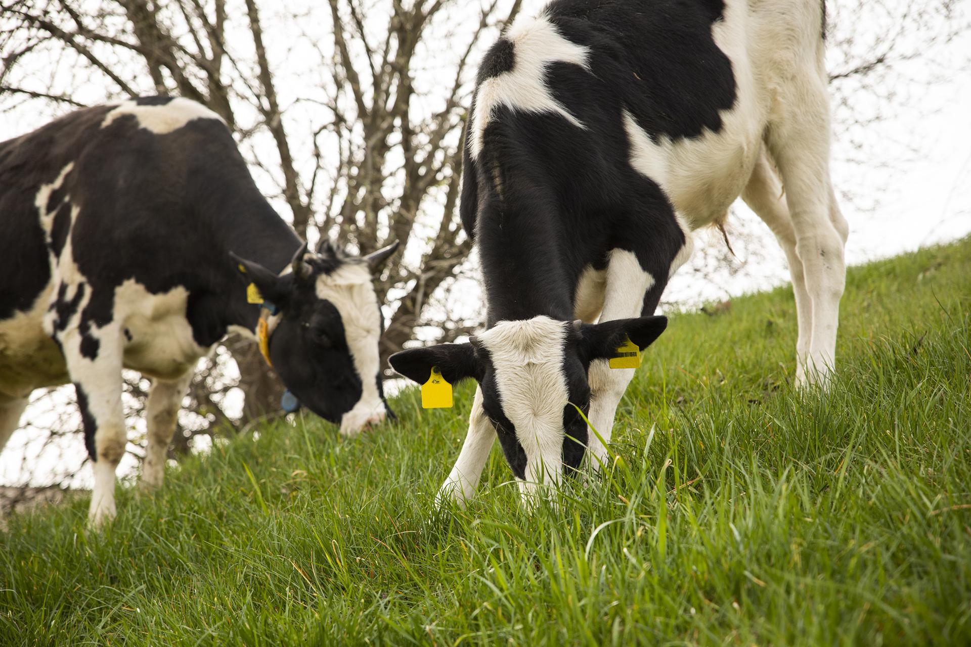Das frische Grün schmeckt unseren Tieren am besten.