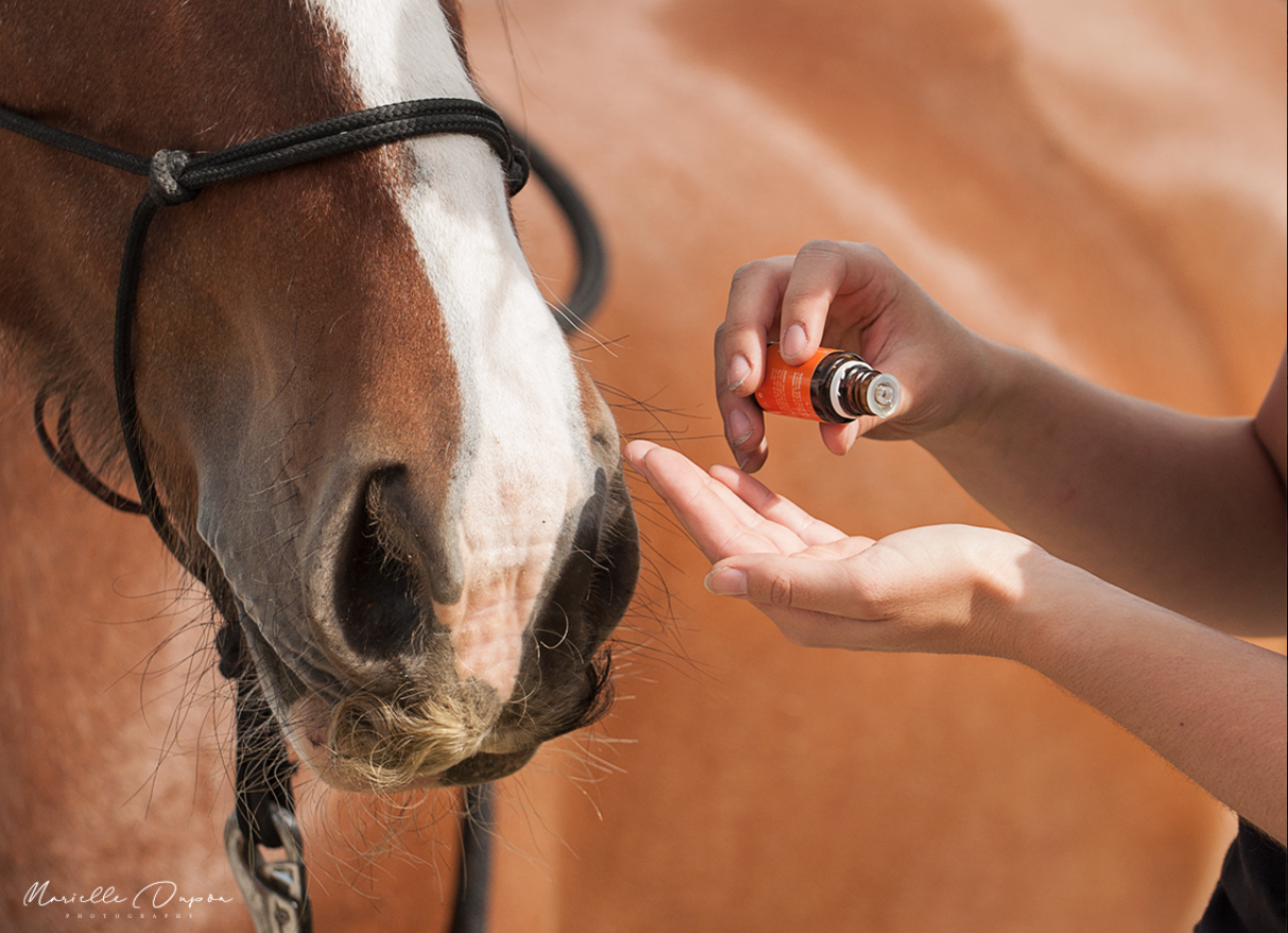 [EN] How to use Essential Oils around your horse