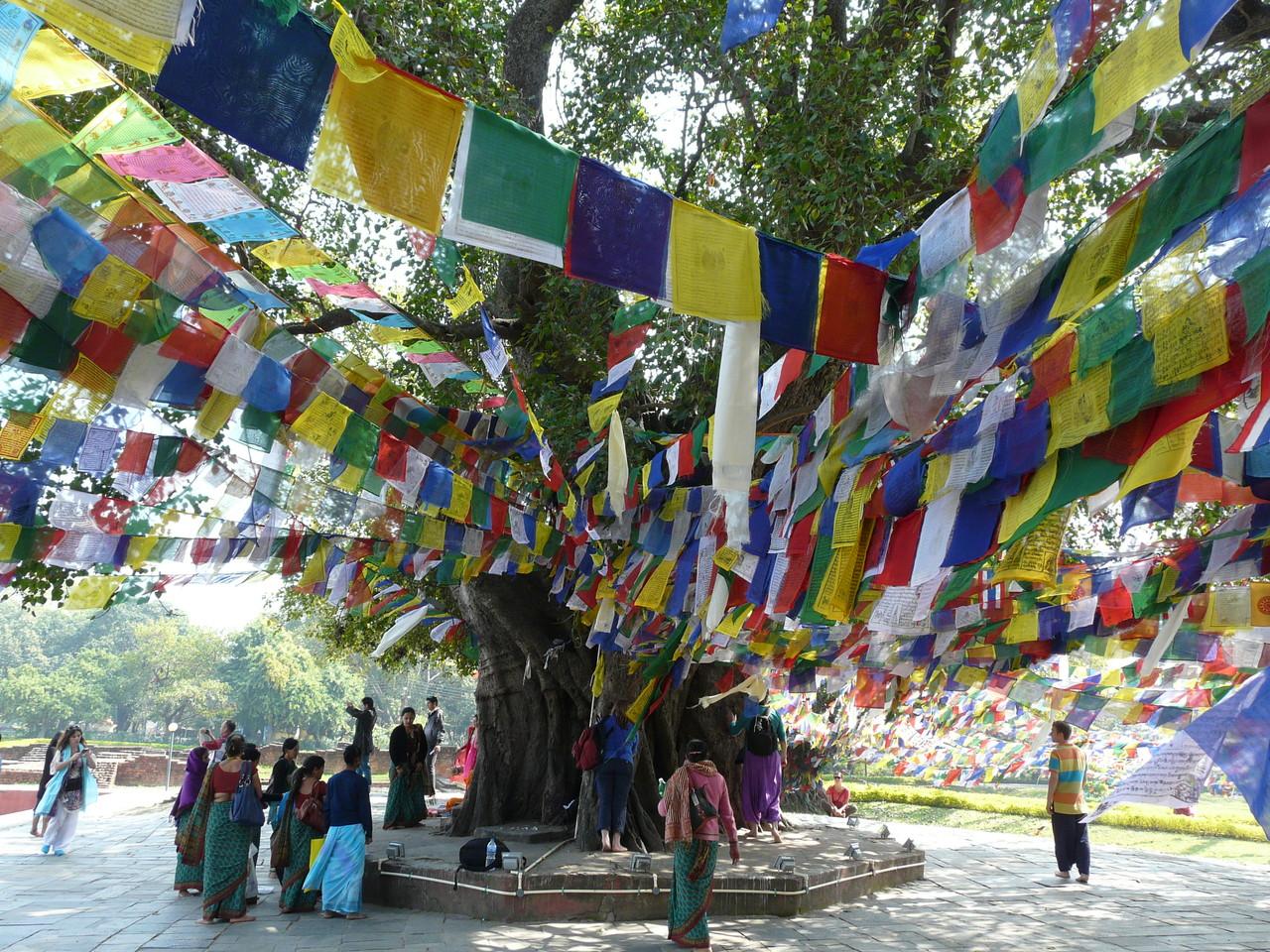 Lumbini, Buddhas Geburtsort