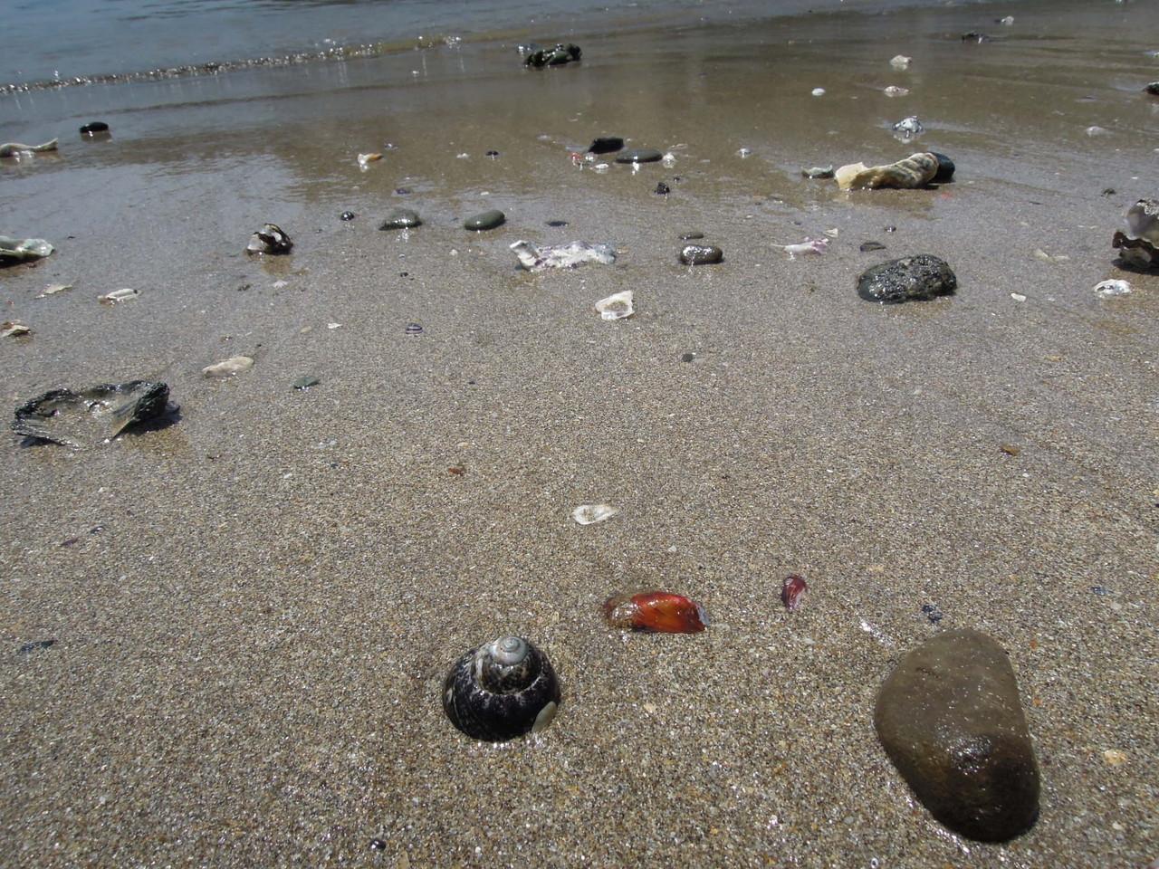 砂浜のクリーン作戦を行ったおかげで浜辺はかなりきれいになっていました