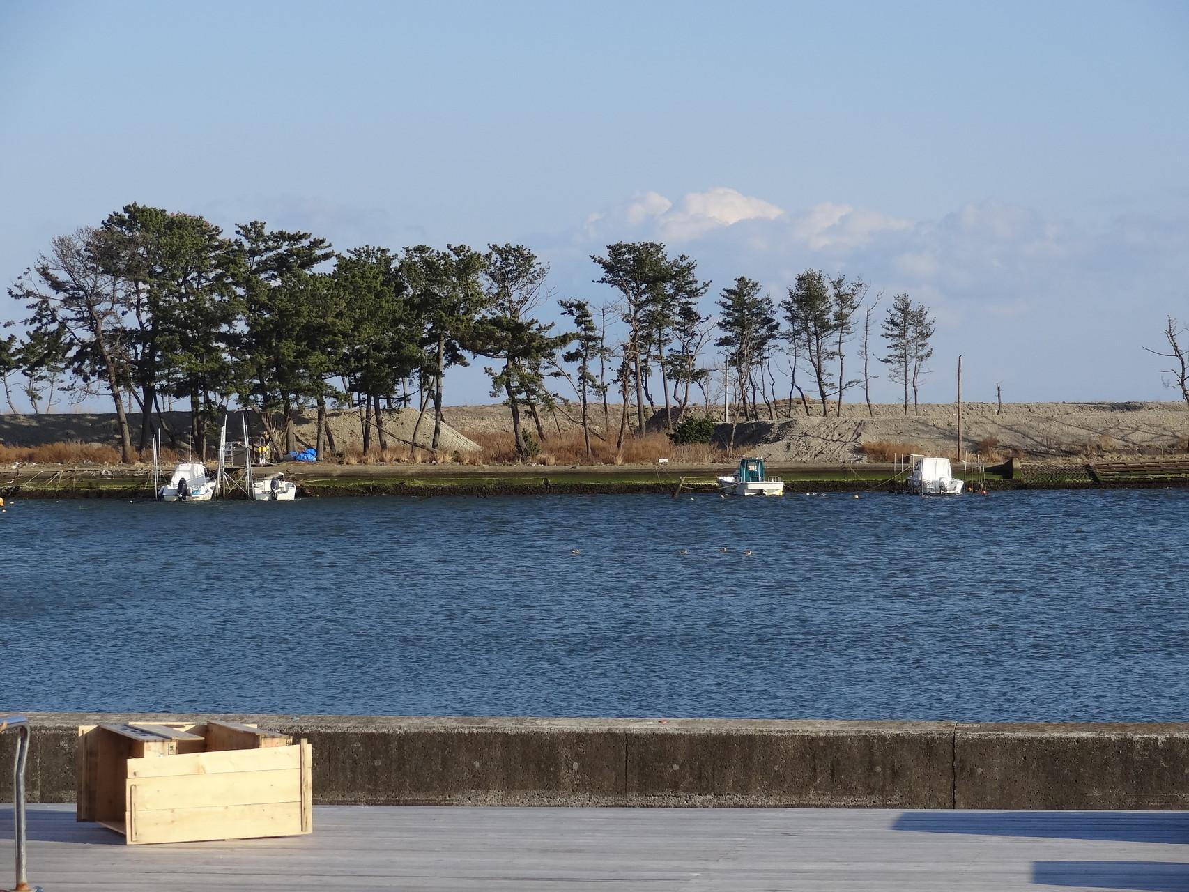名取市閖上の河口付近、松が少し残っていました。