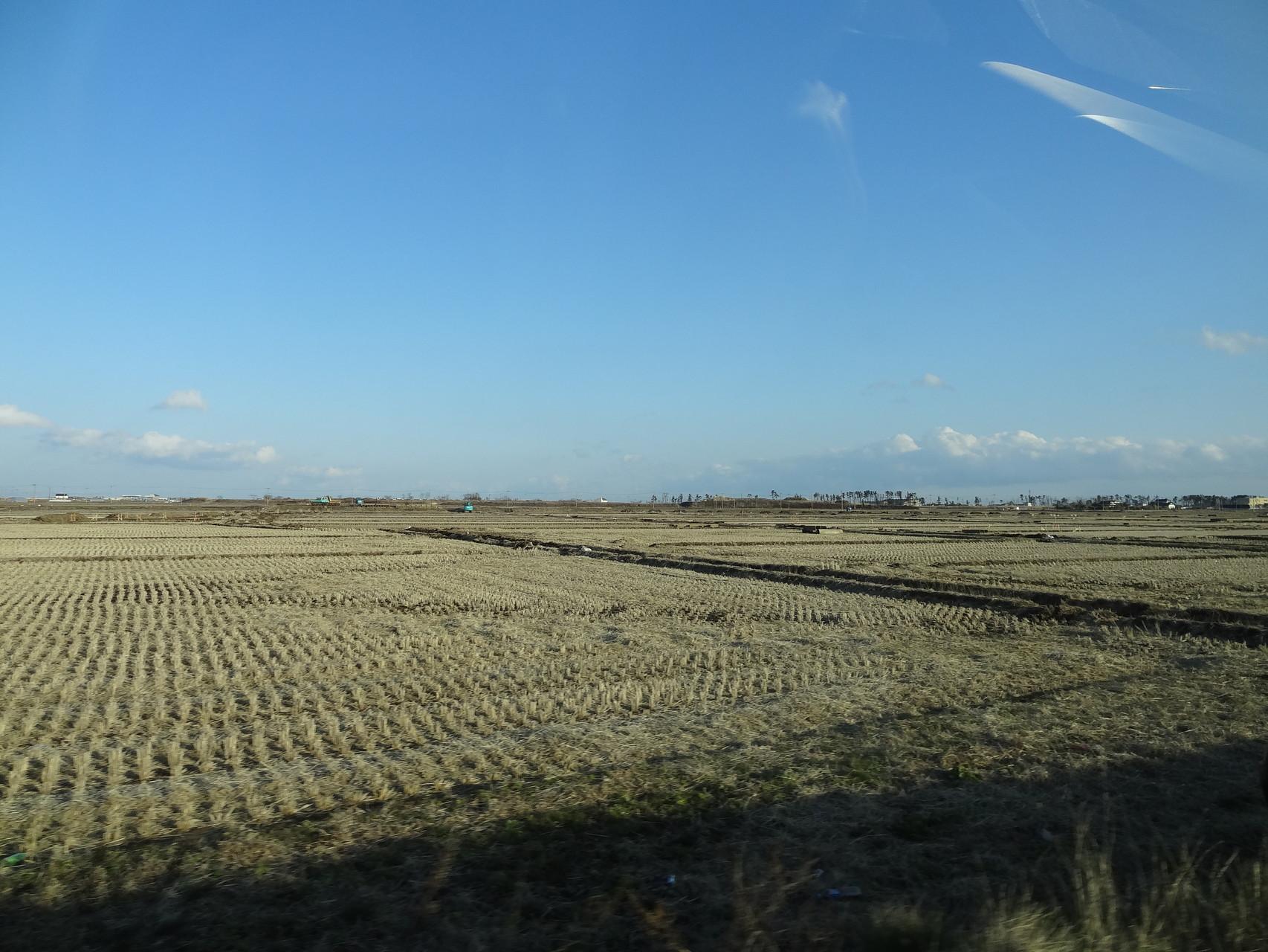 収穫を終えた田んぼも見られ、塩害を乗り越え、稲作を再開できているところもありました。