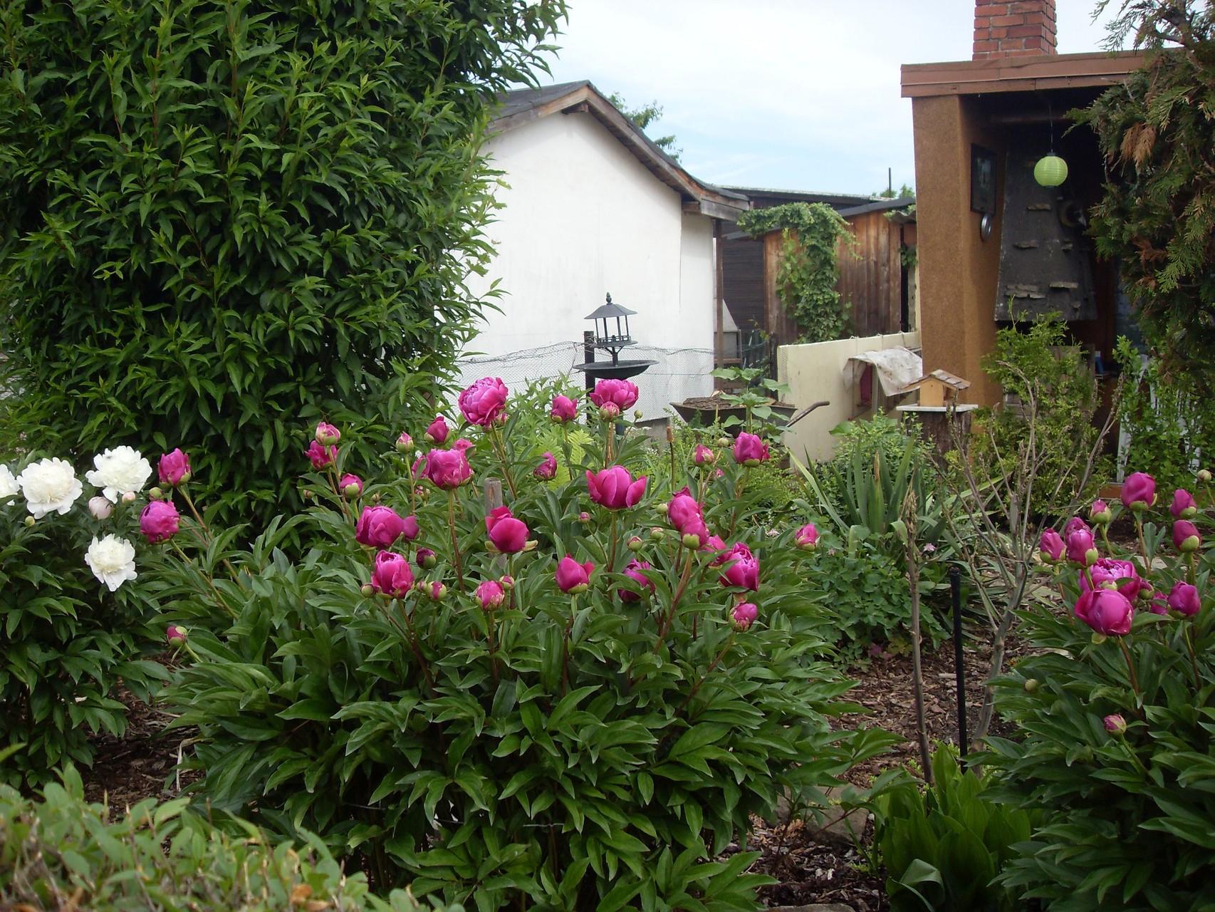 Blumen 2011-4