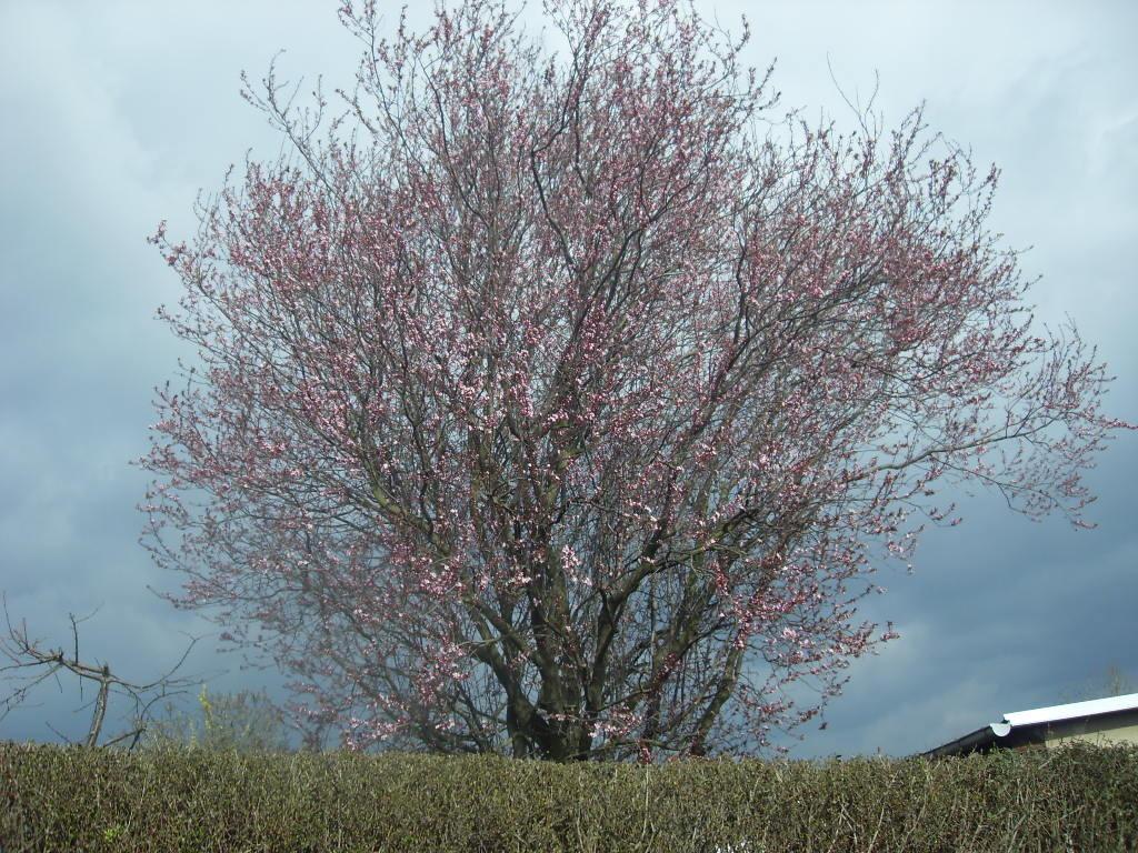 Blüten 2014-7