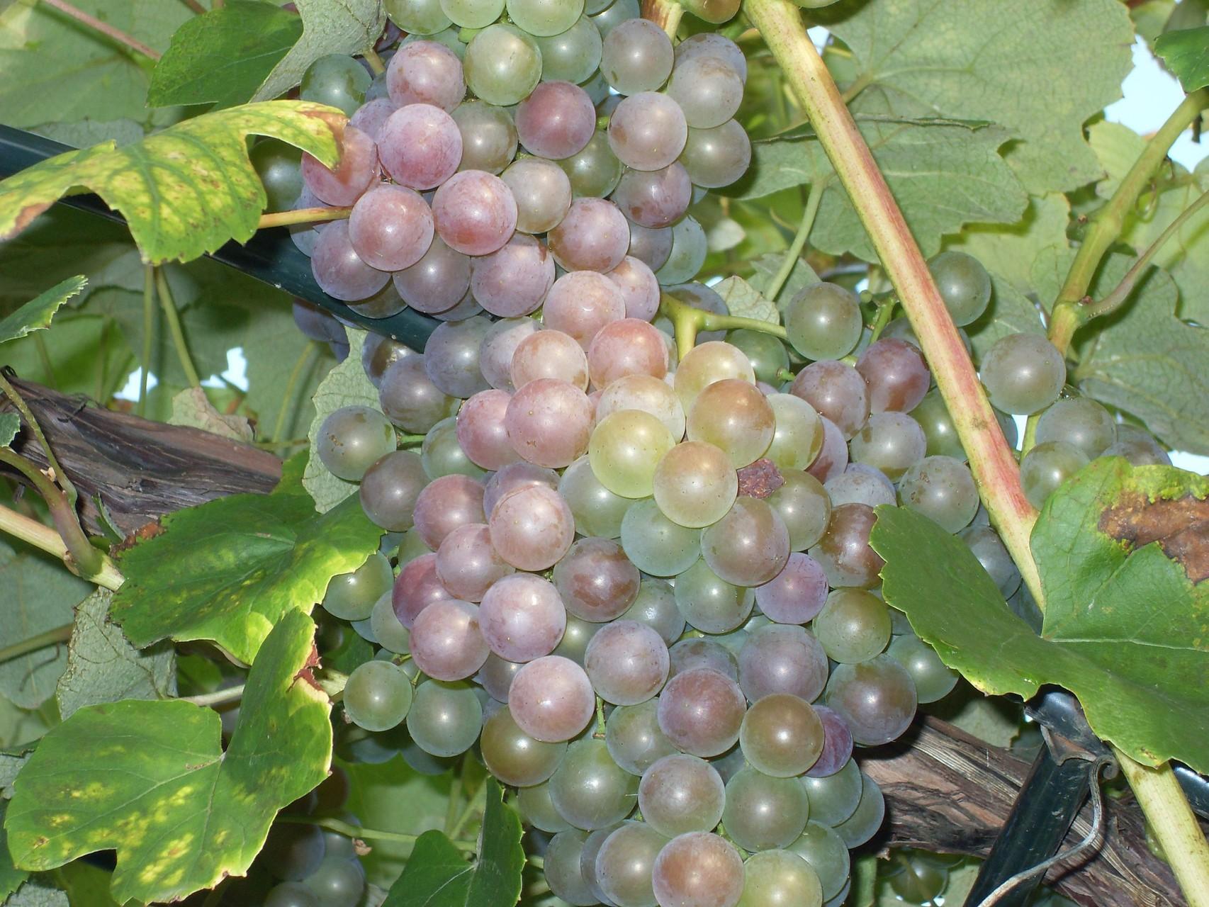 Früchte 2008-2