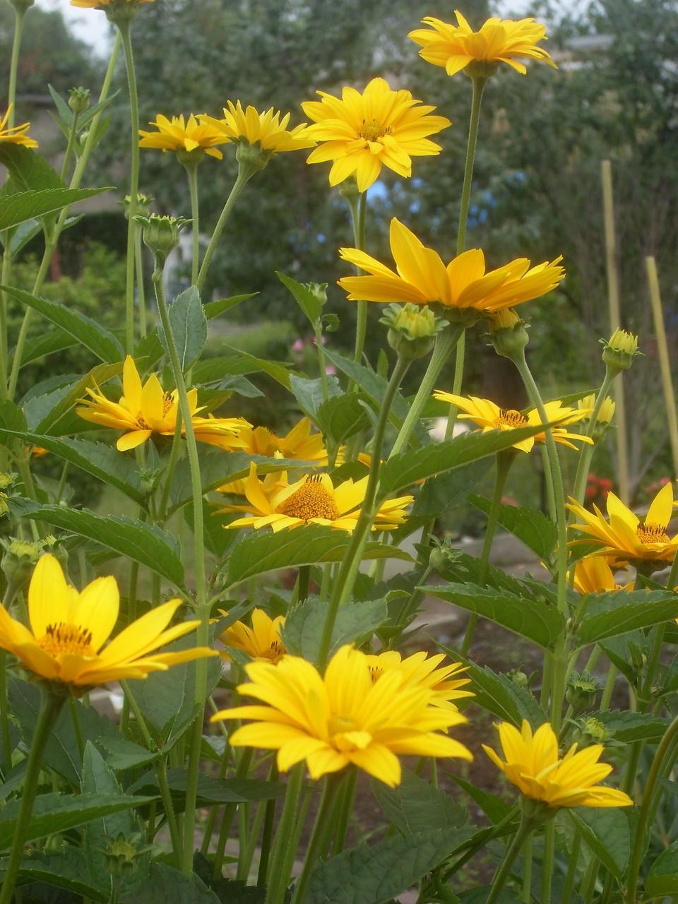 Blumen 2012-8