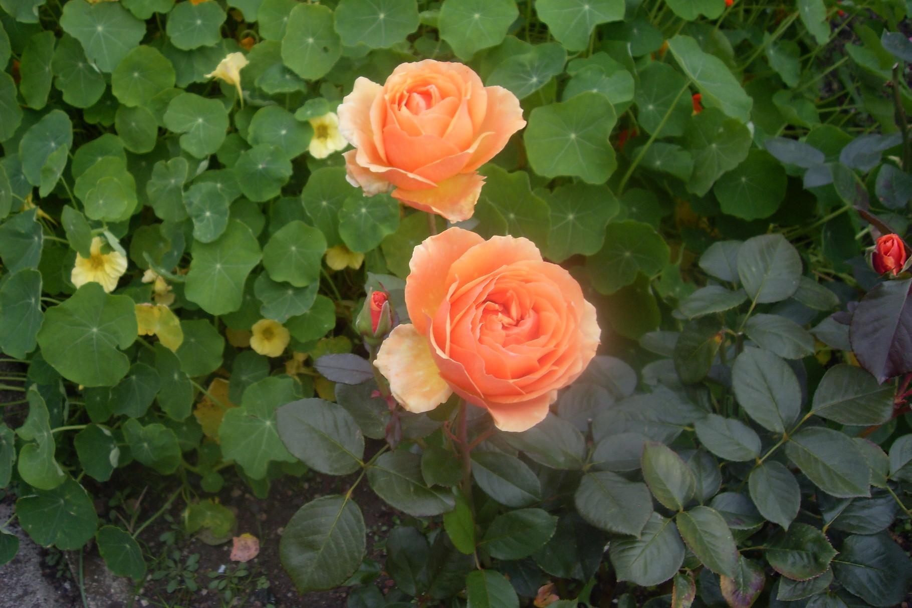 Blumen 2015-1