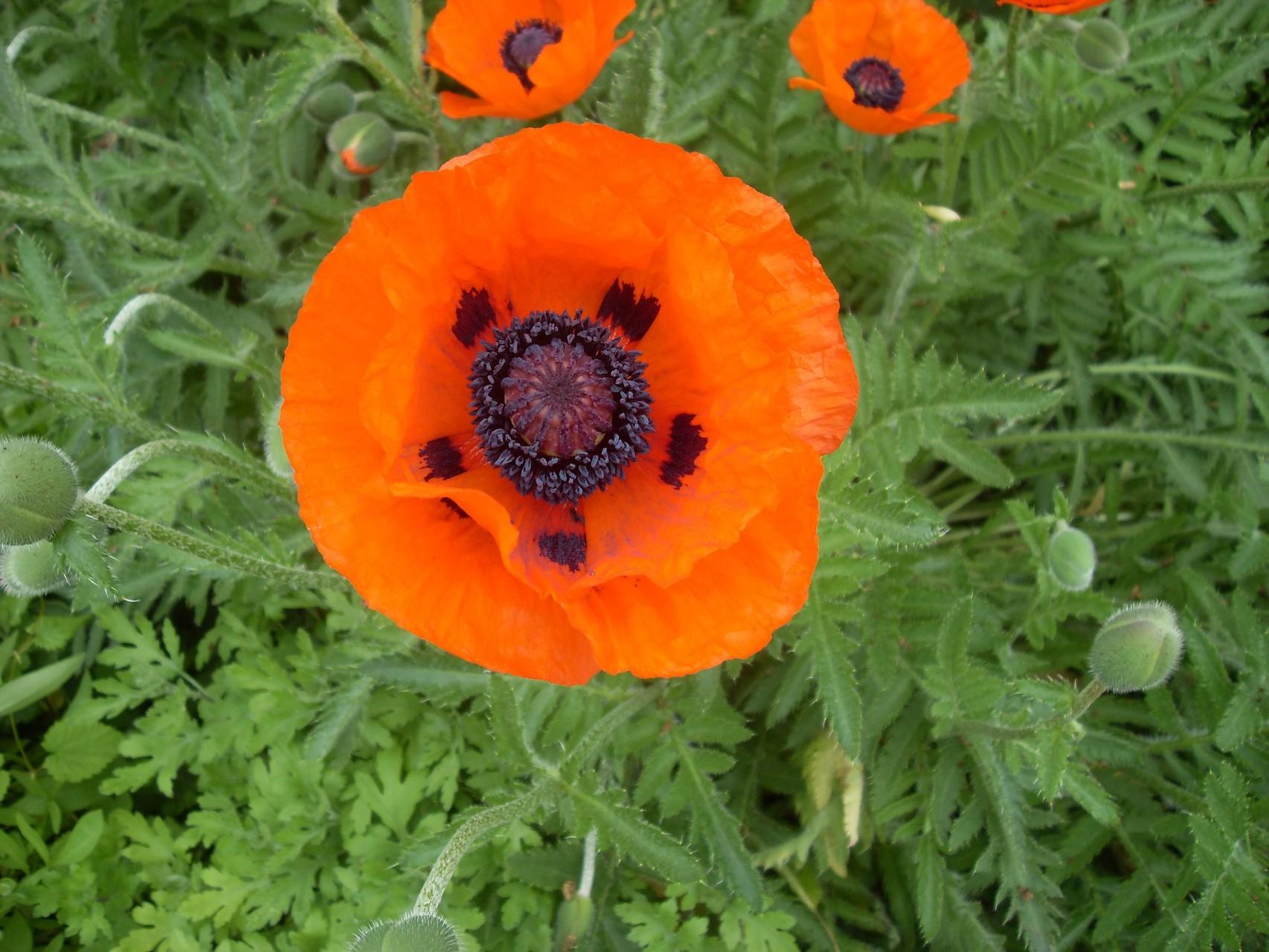 Blumen 2010-5