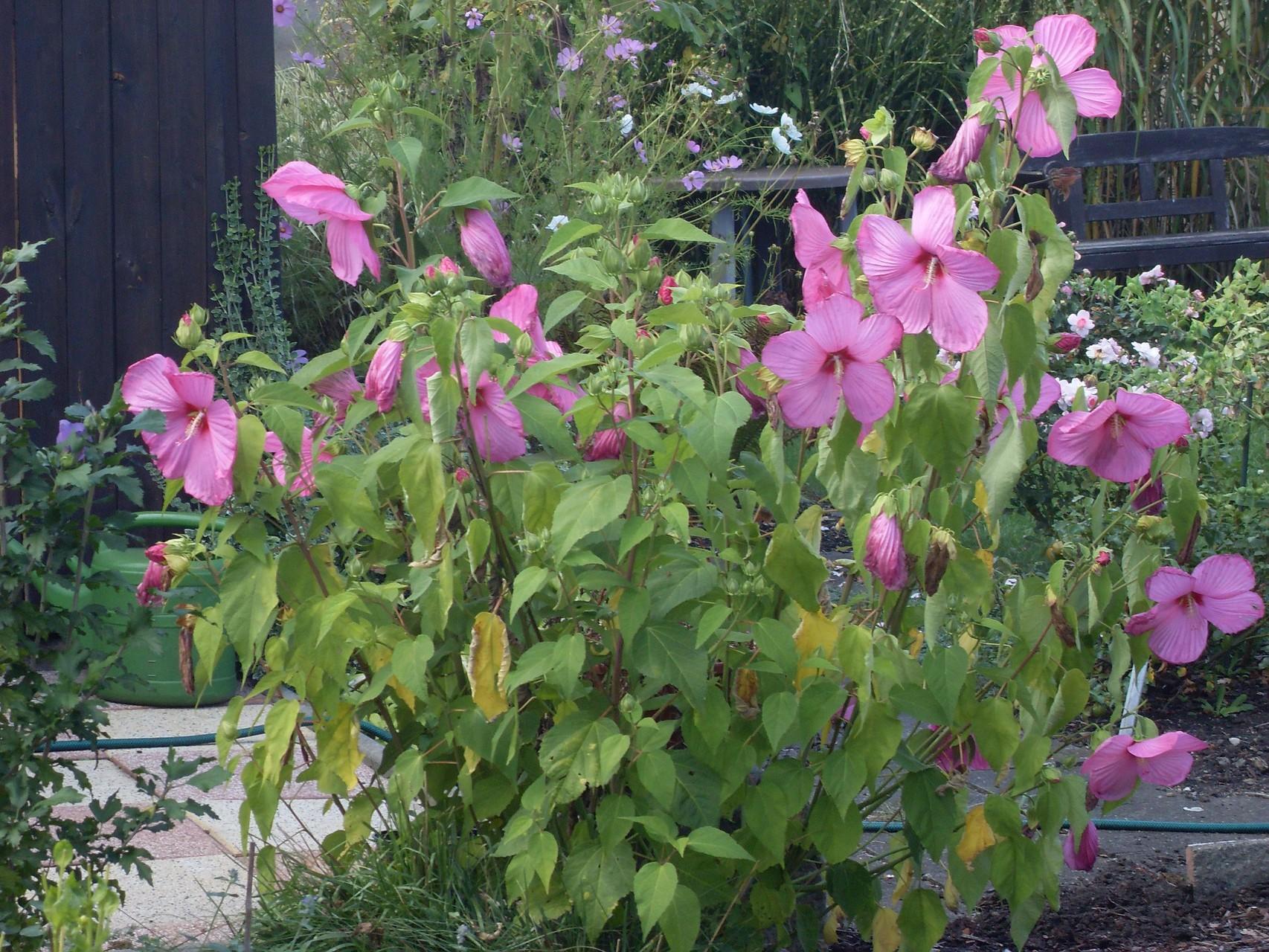 Blumen 2011-3