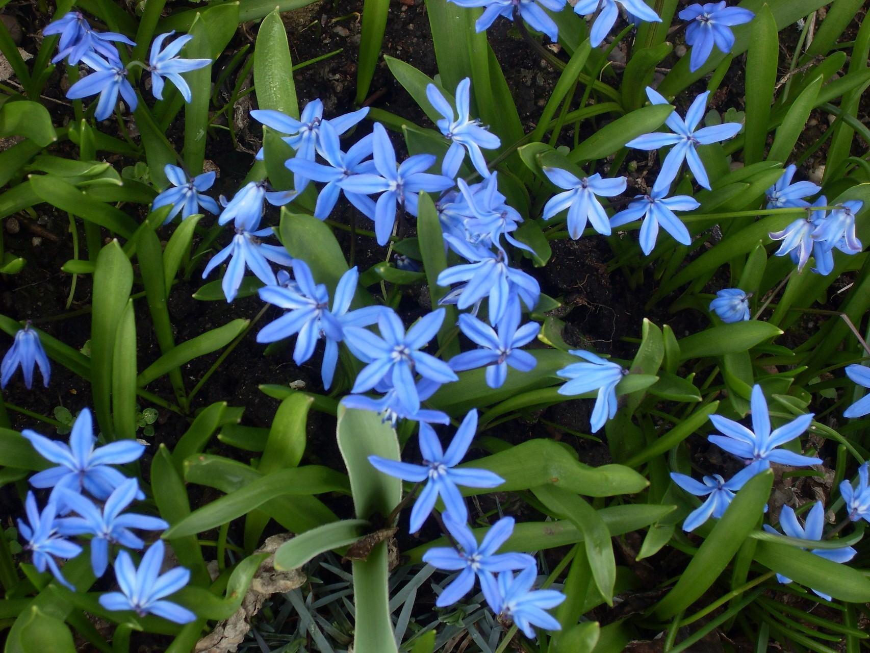 Blumen 2010-7