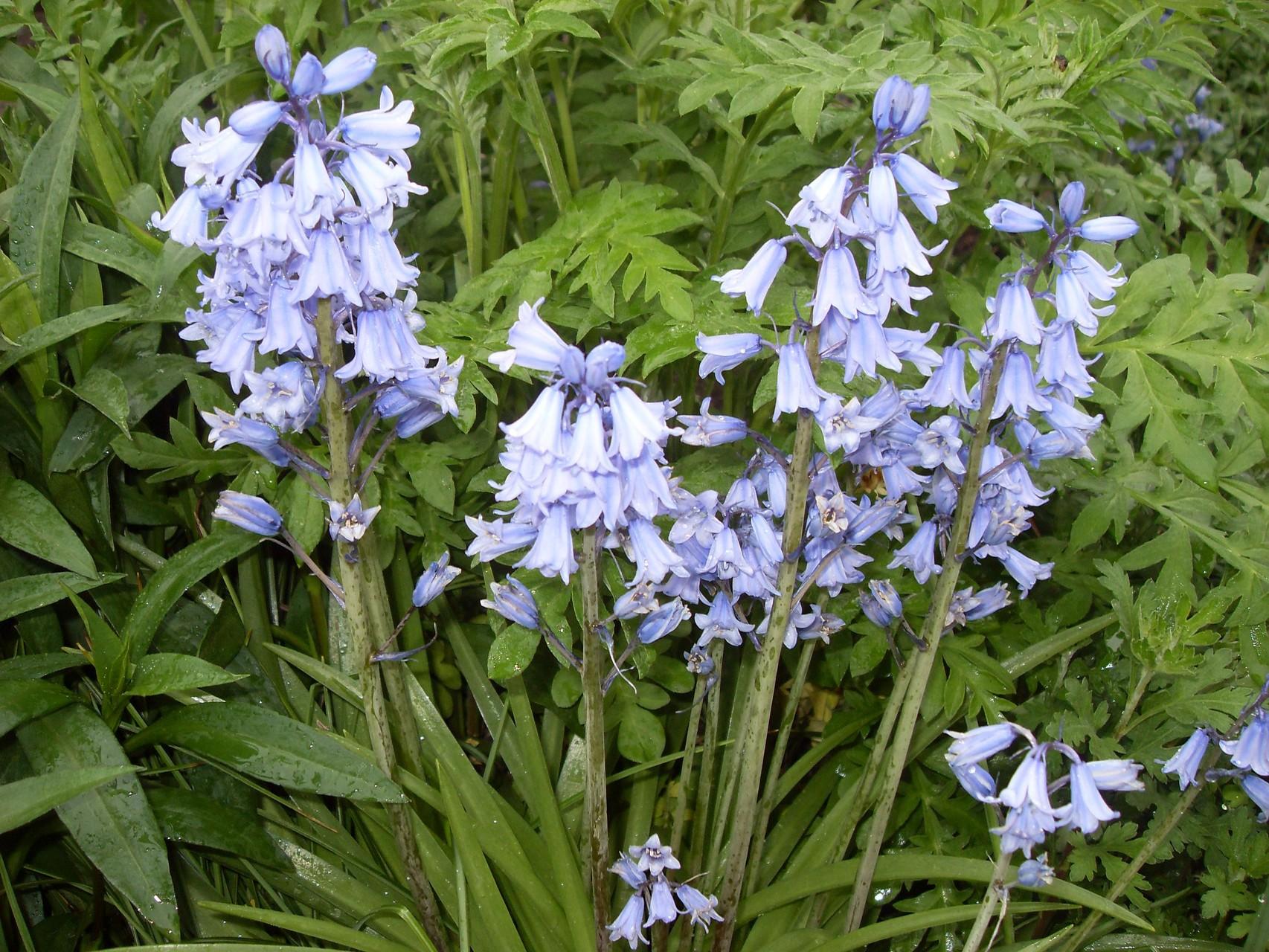 Blumen 2011-5