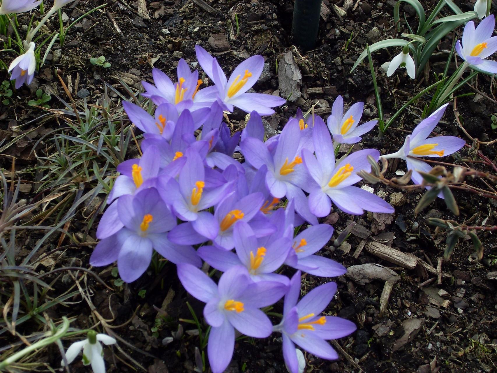 Blumen 2012-1