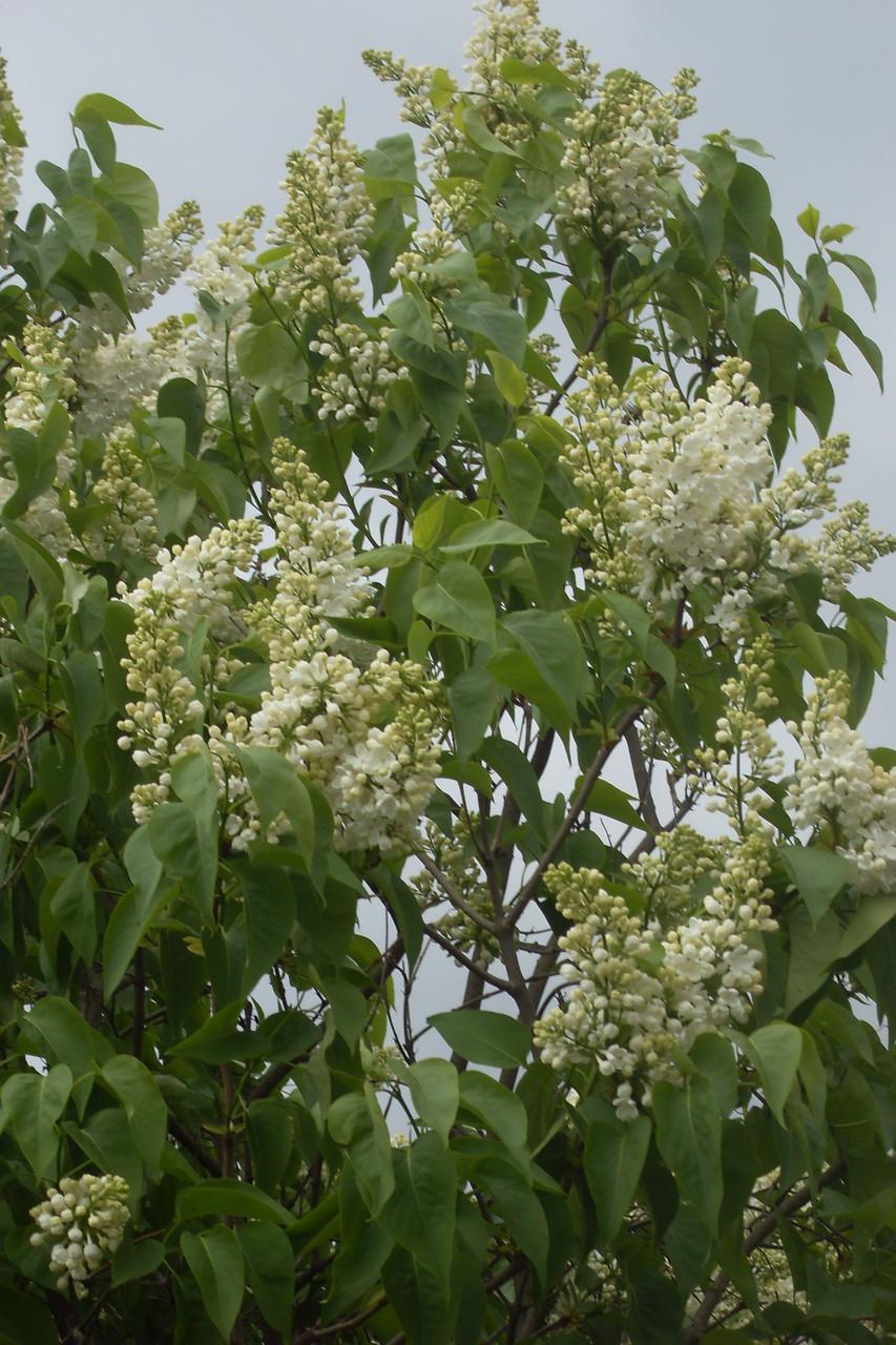 Blüten 2014-6