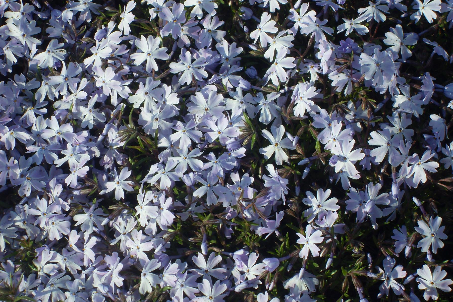 Blumen 2015-2