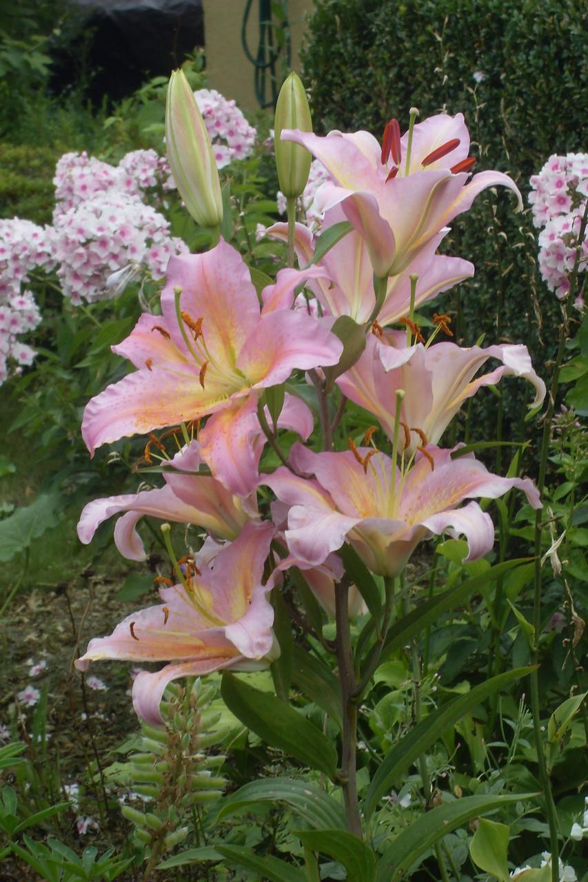 Blumen 2014-7