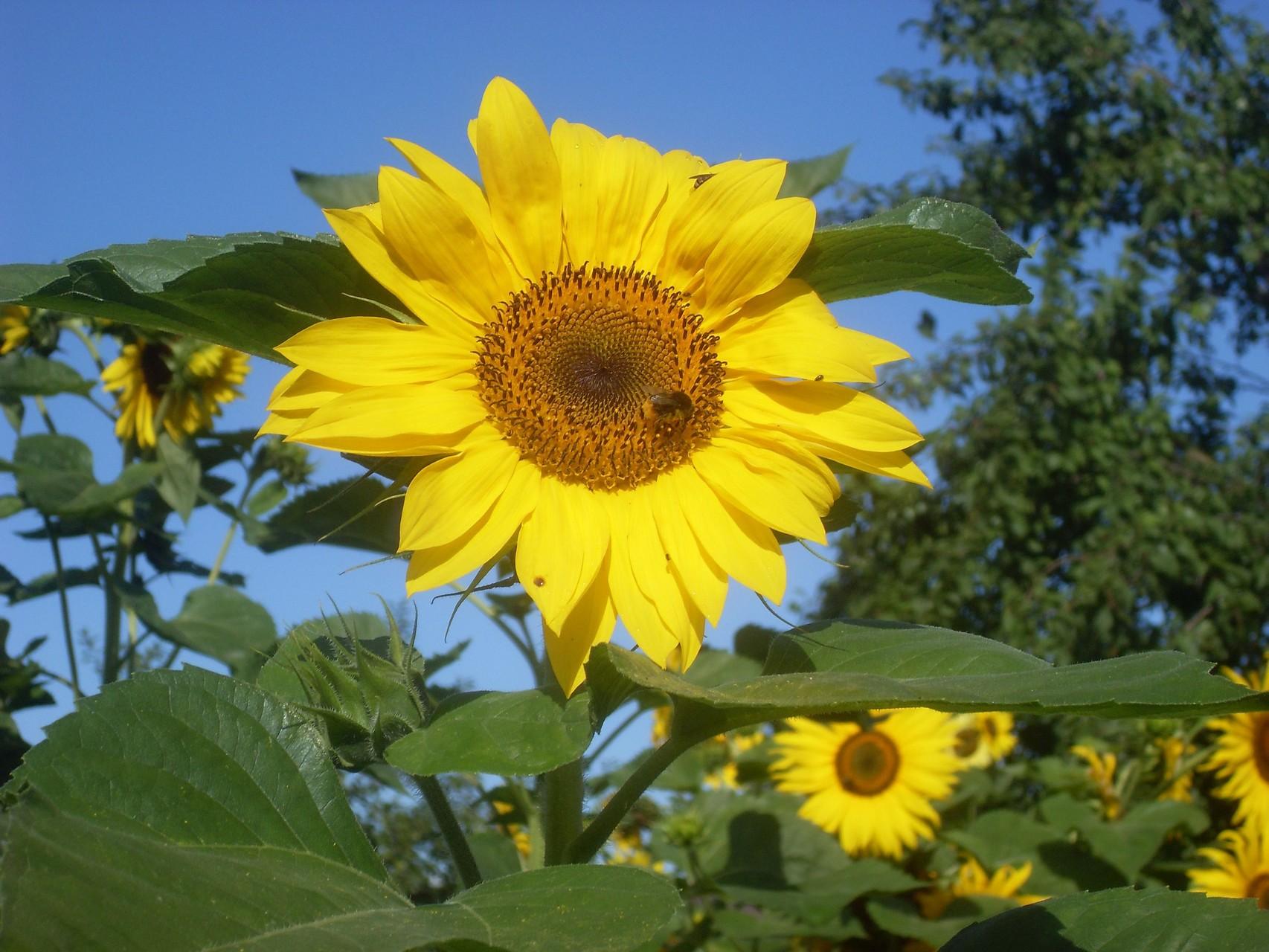Blumen 2012-7