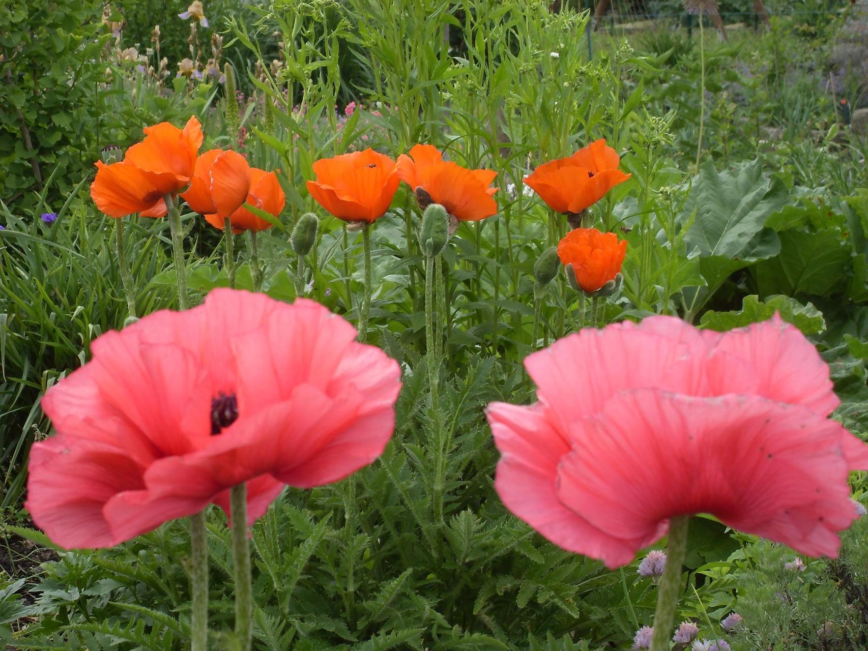 Blumen 2011-6