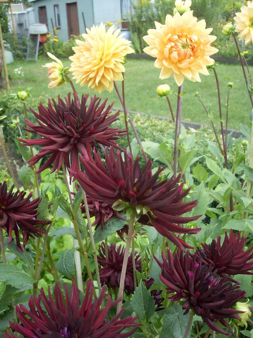 Blumen 2012-2