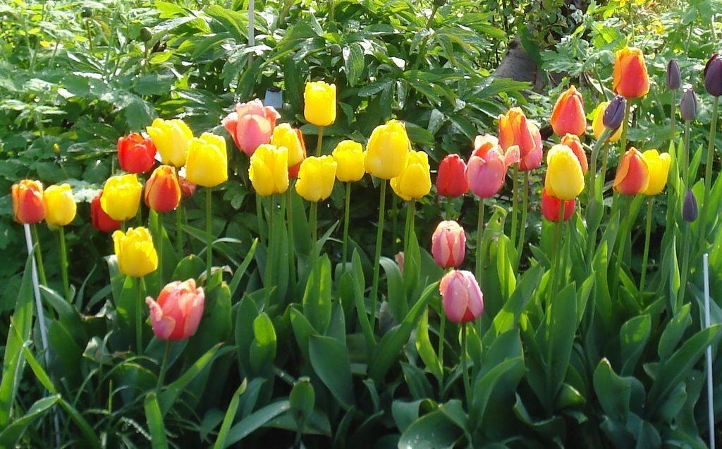 Blumen 2008-1