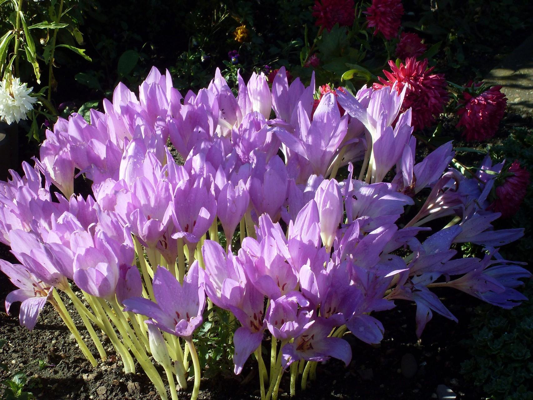 Blumen 2011-8