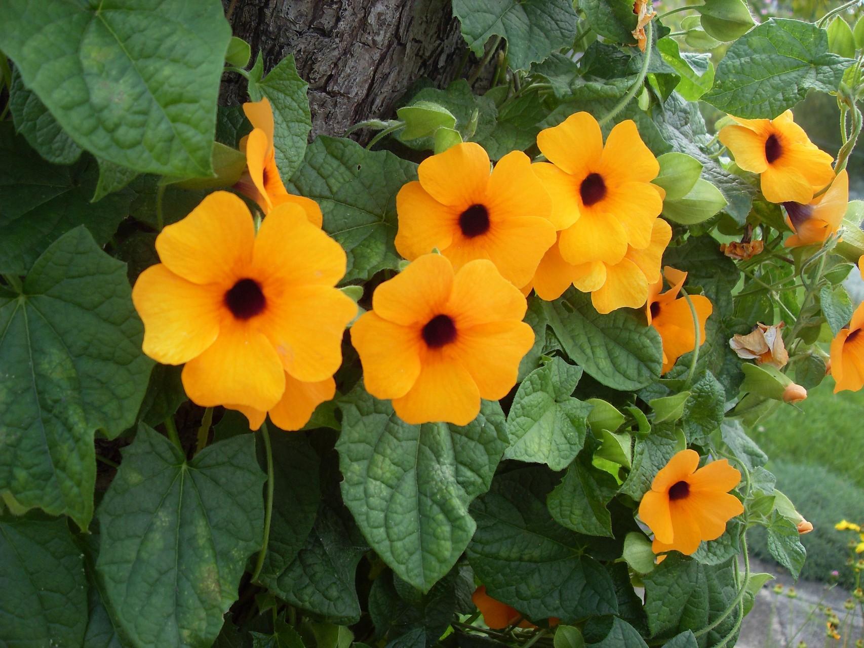 Blumen 2011-7