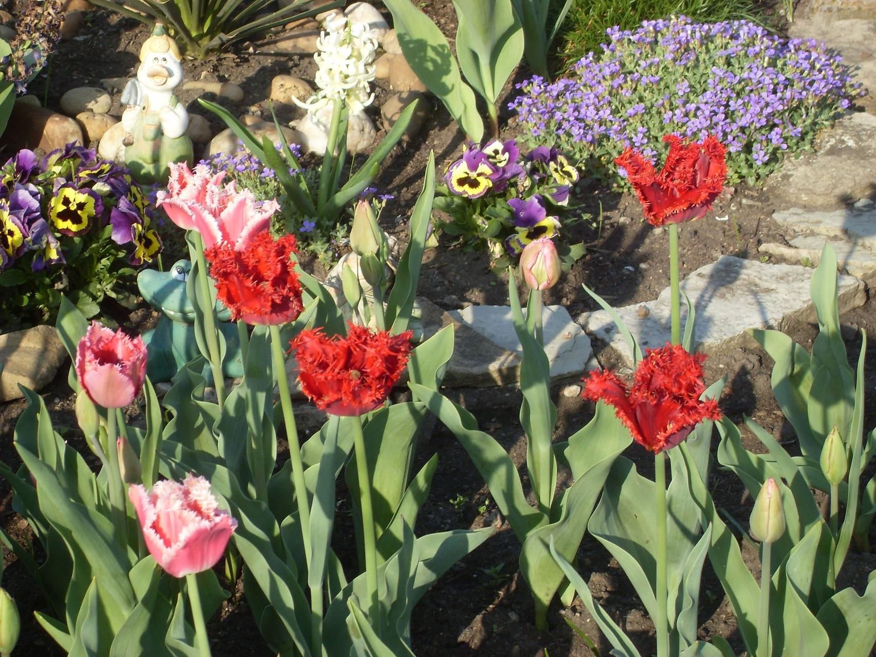Blumen 2009-3