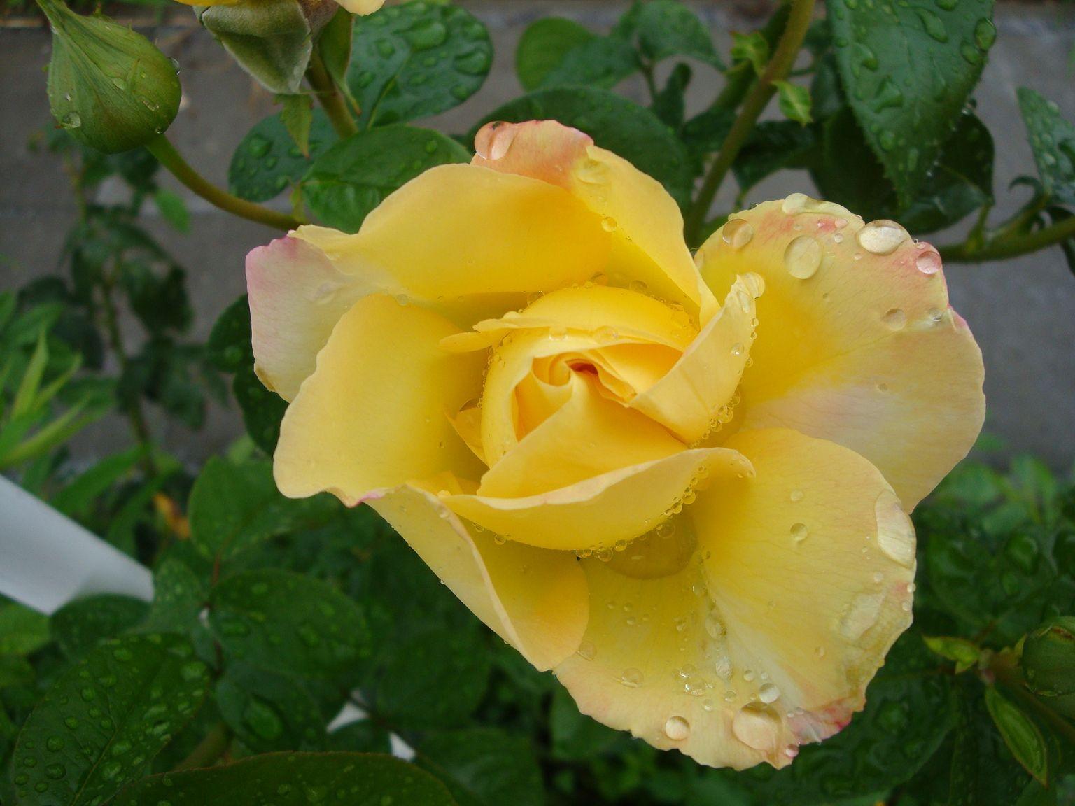 Blumen 2010-2