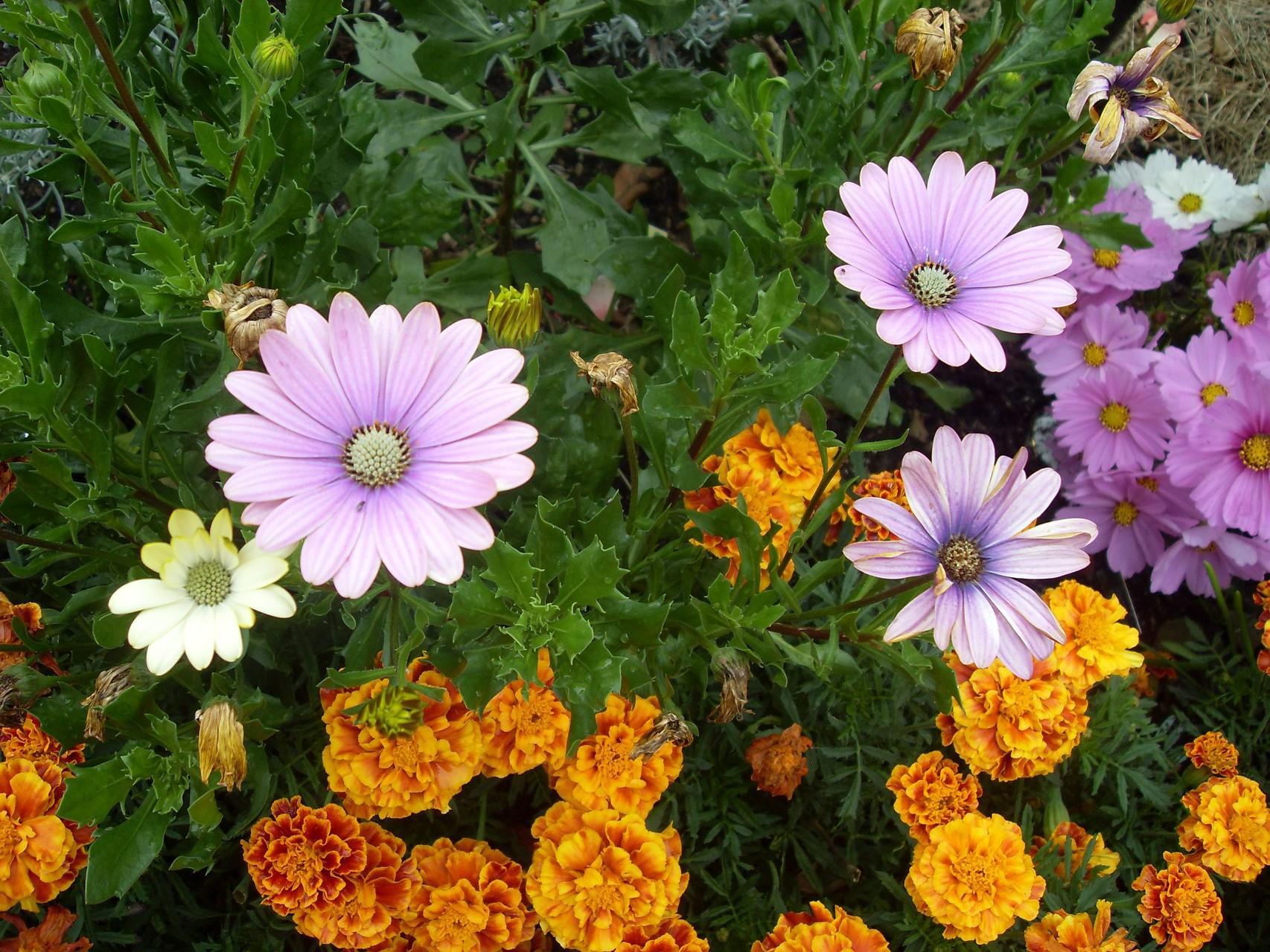 Blumen 2008-5