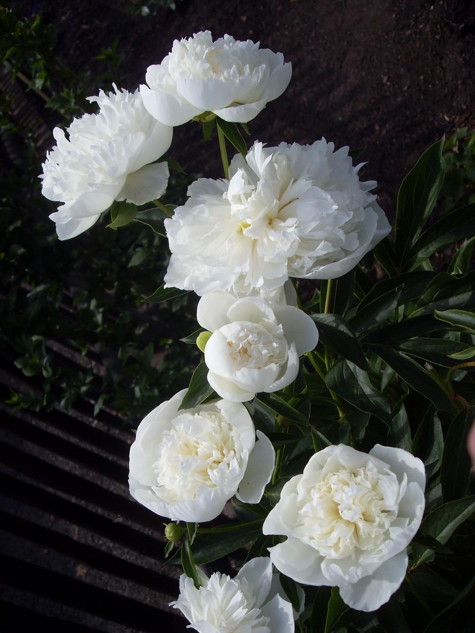 Blumen 2012-4