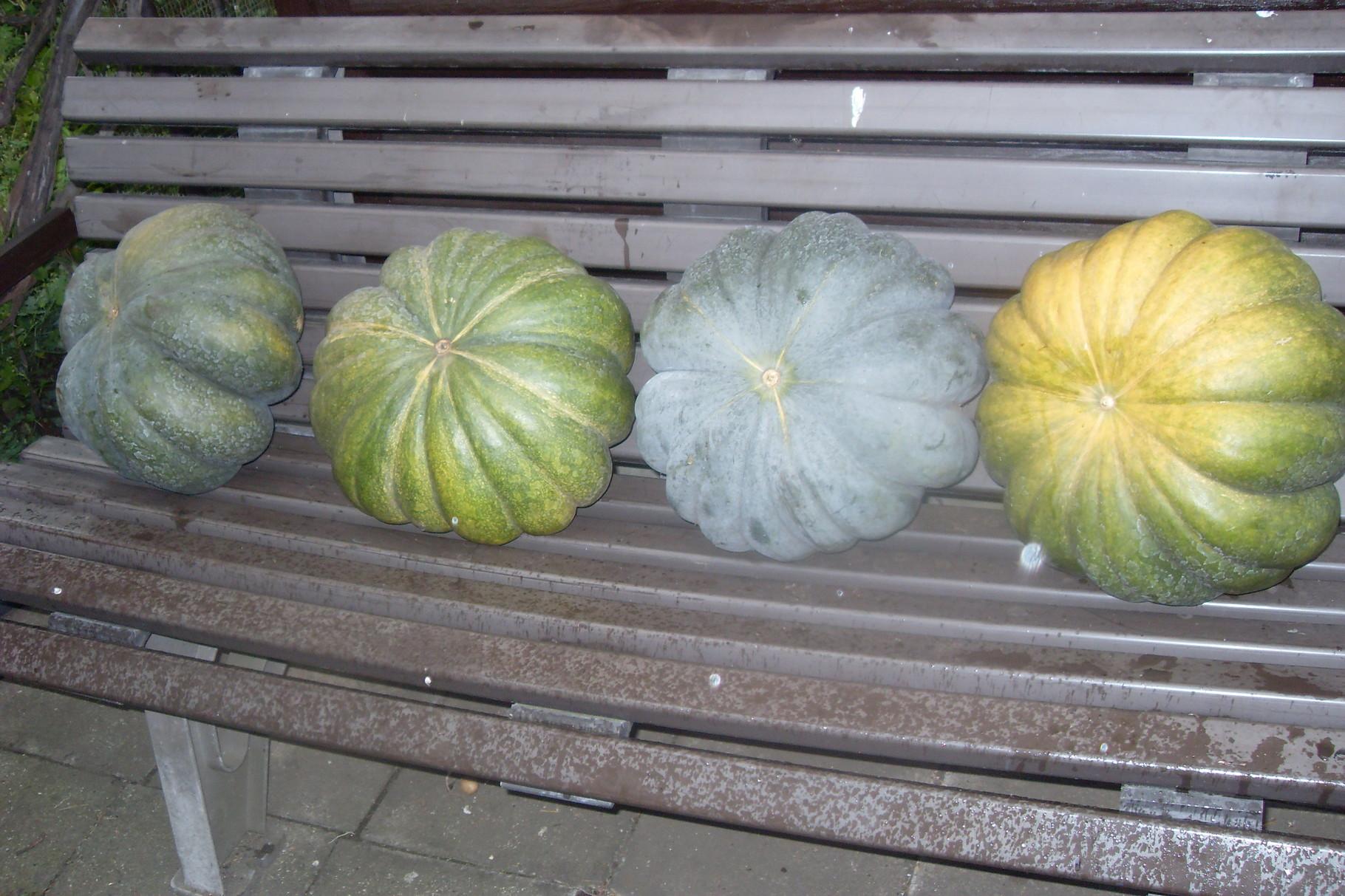 Gemüse 2015-1