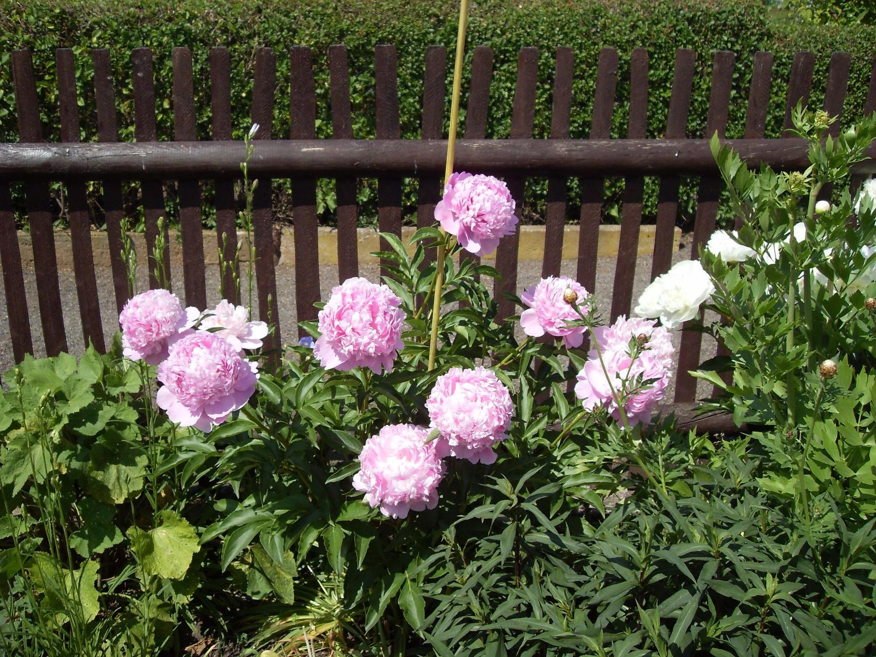 Blumen 2011-1
