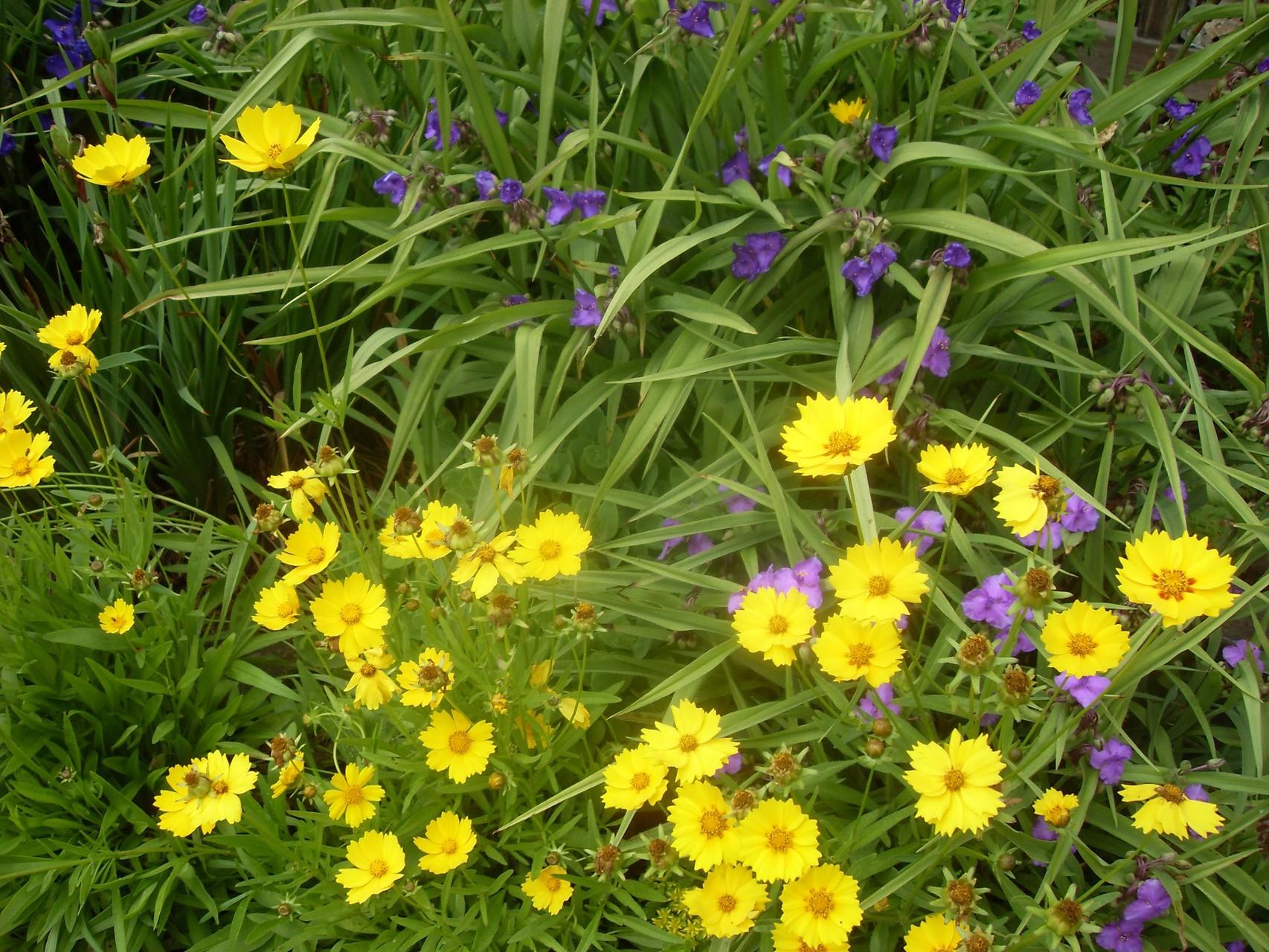 Blumen 2012-5