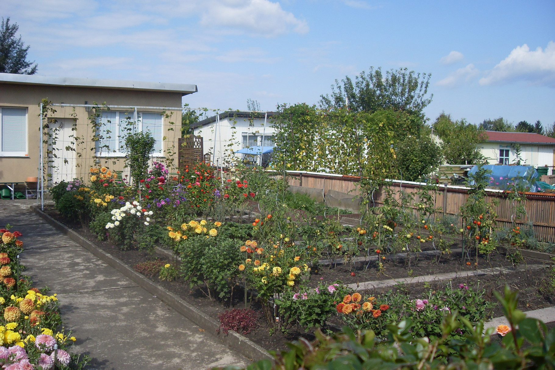 Garten 2014-4