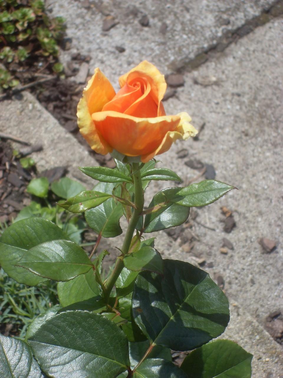 Blumen 2012-6