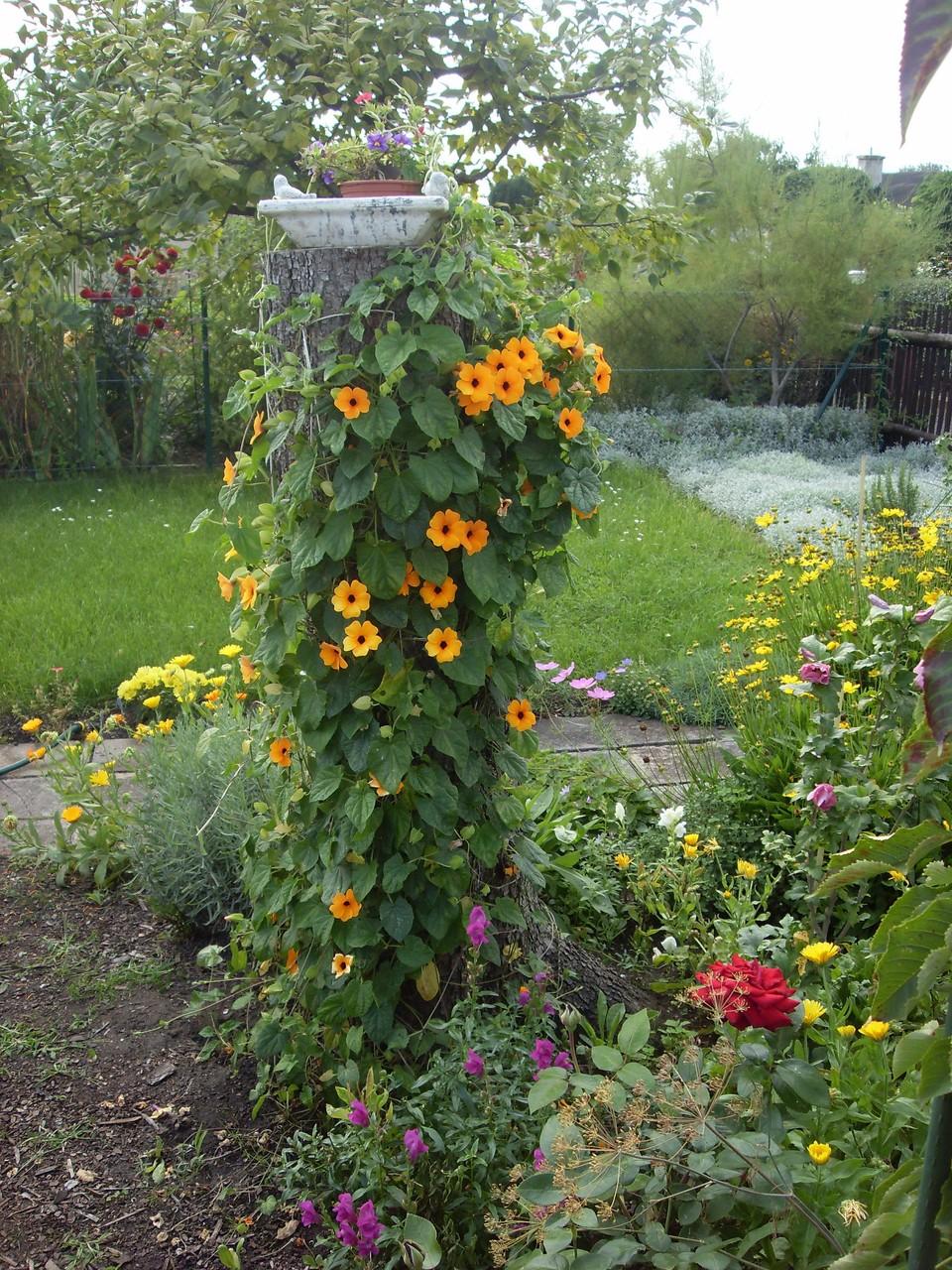 Blumen 2011-2