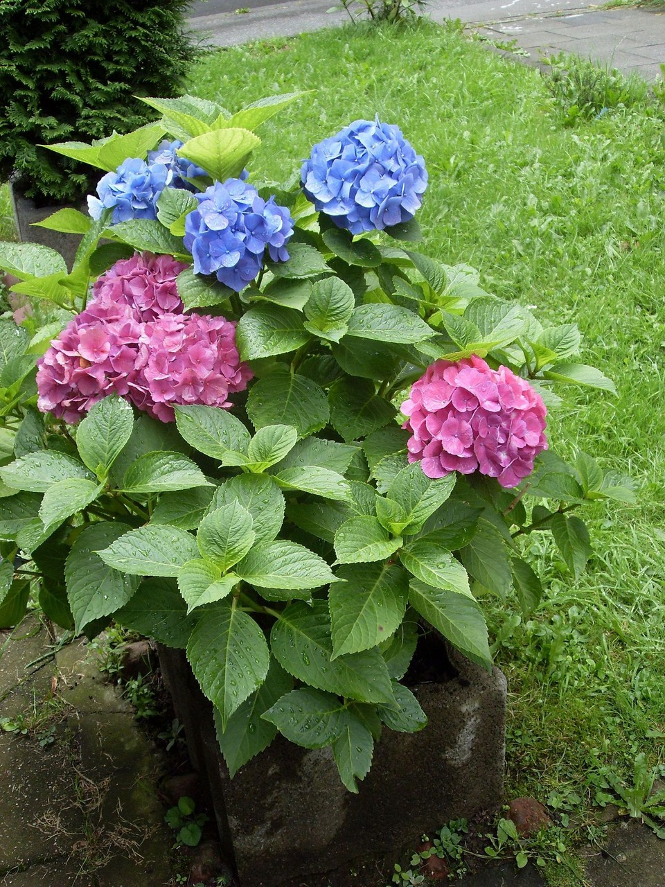 Blumen 2008-3