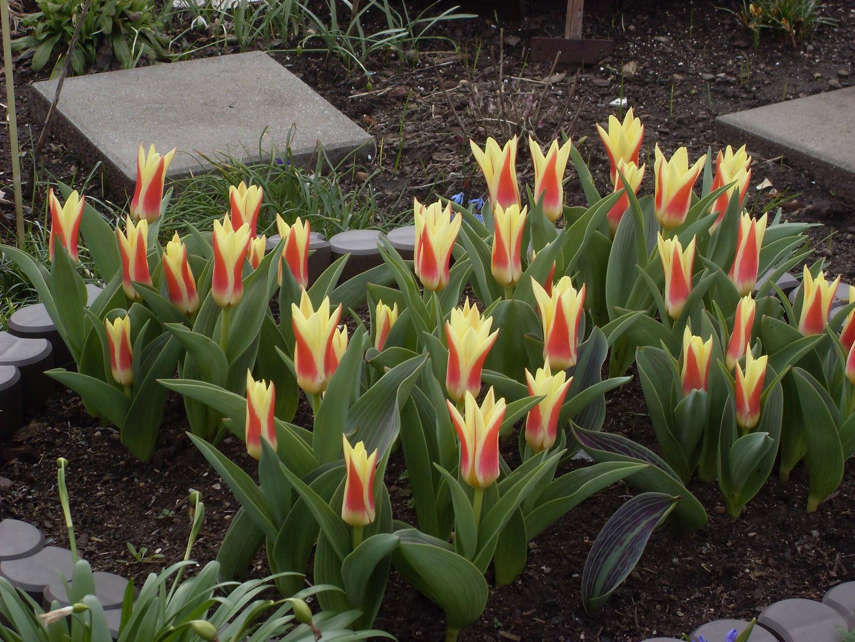 Blumen 2010-6