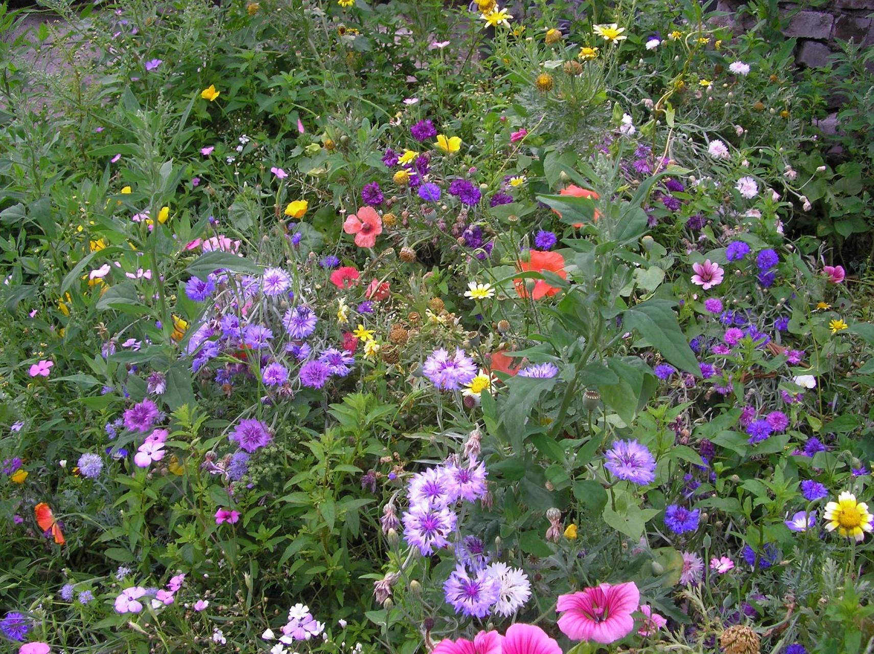 Blumenwiese 2008-1