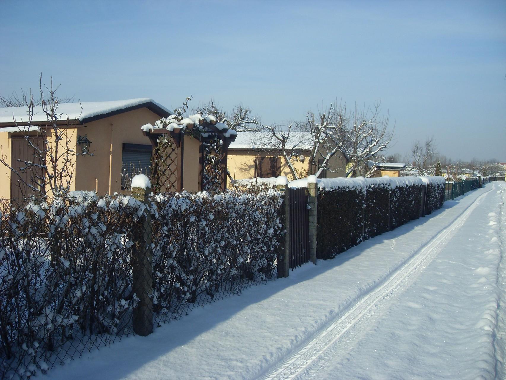 Garten 2010-1