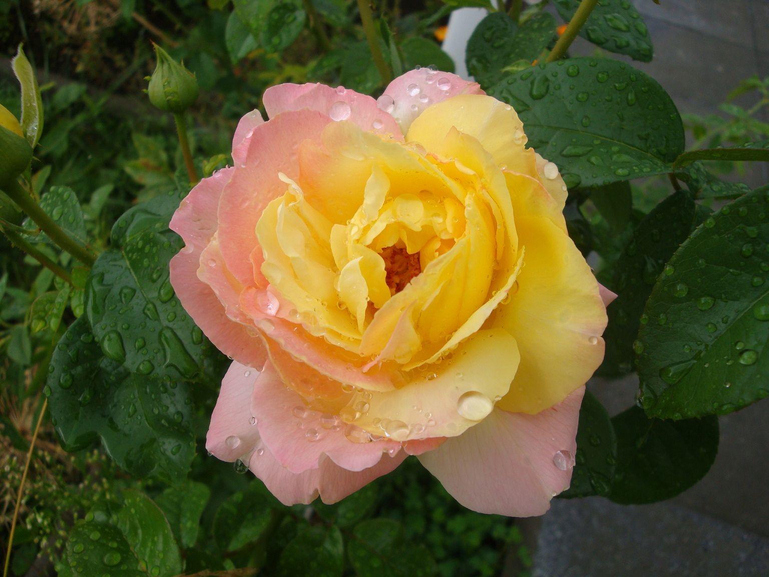 Blumen 2010-1