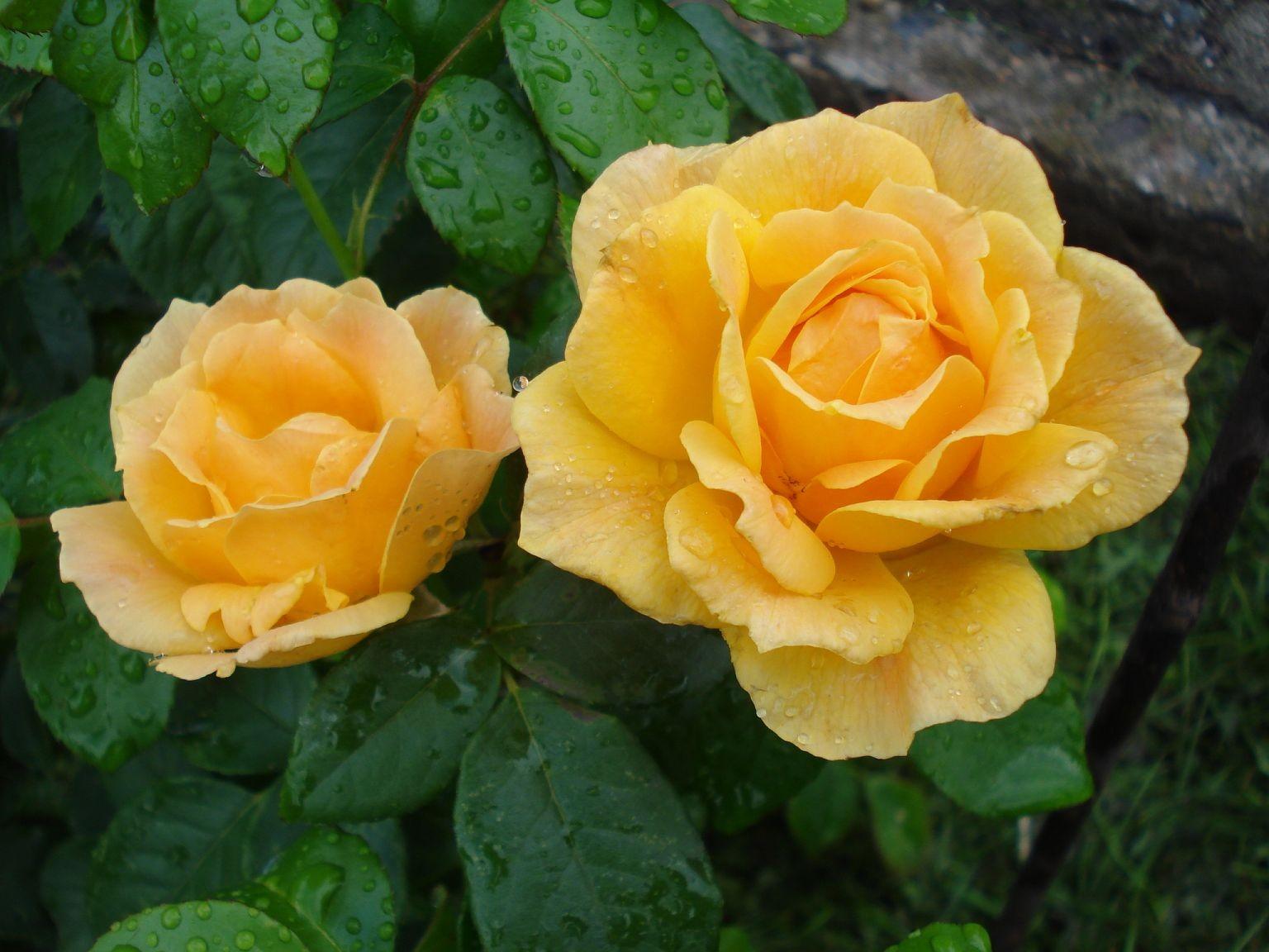 Blumen 2008-2