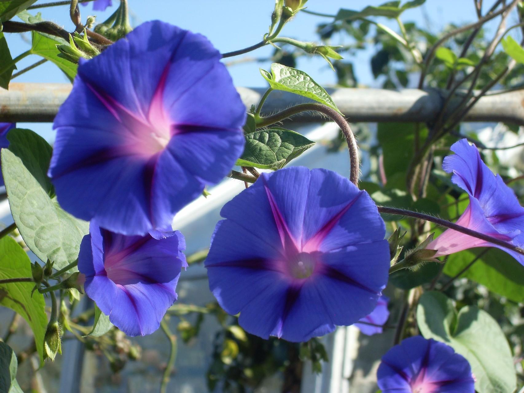 Blumen 2008-6