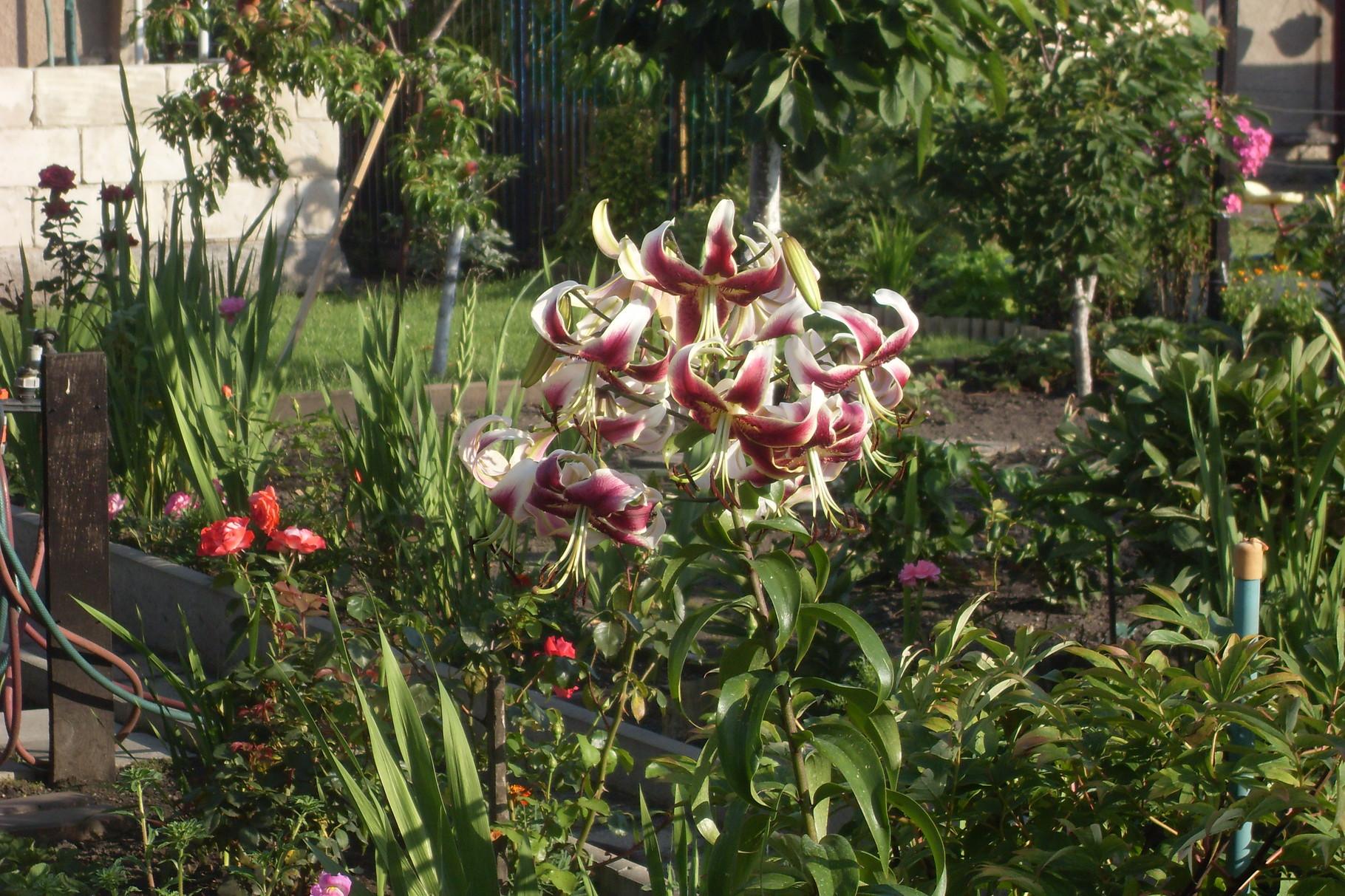 Blumen 2014-1