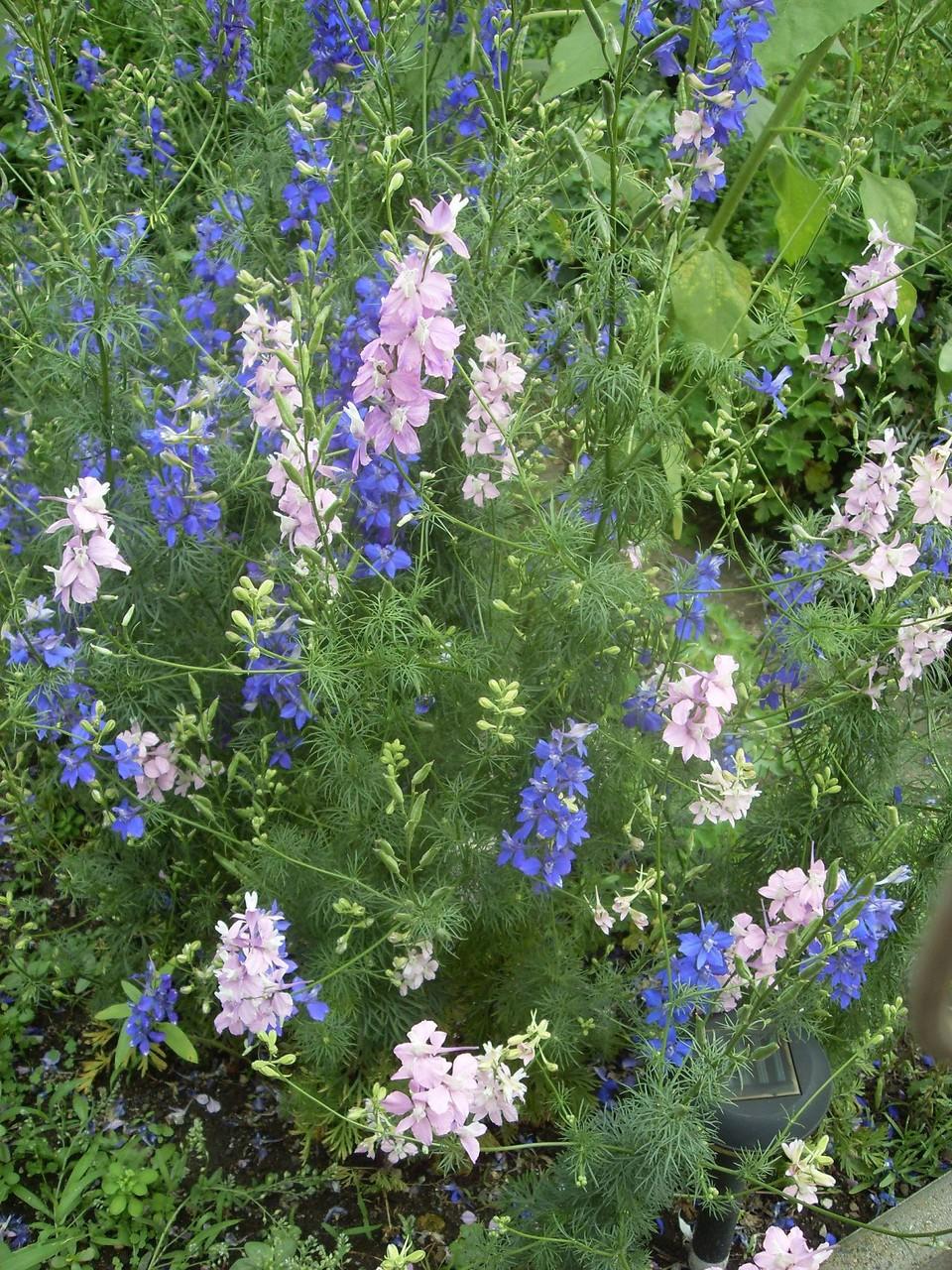 Blumen 2012-10