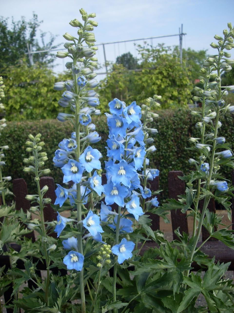 Blumen 2012-3