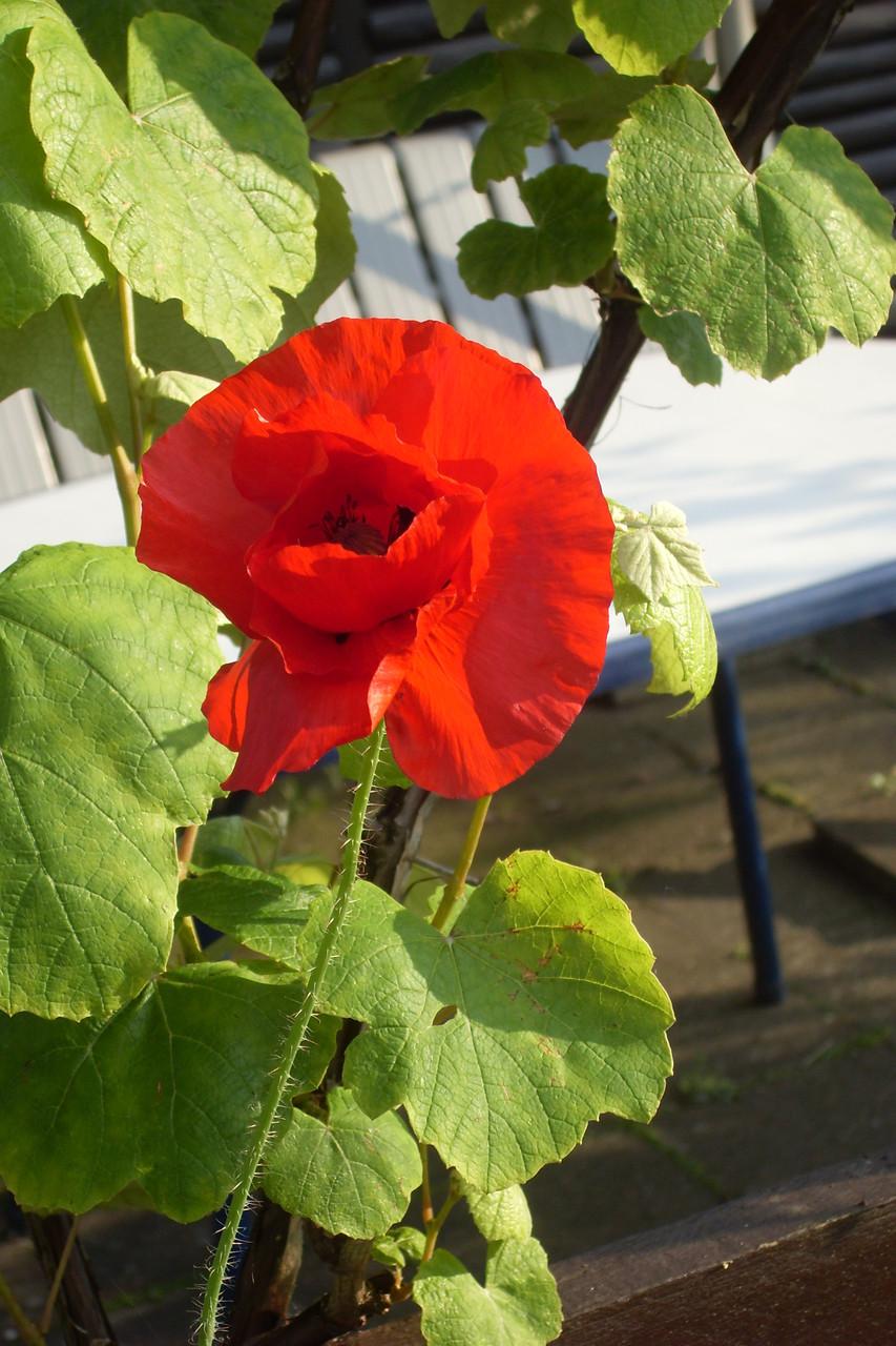 Blumen 2014-5