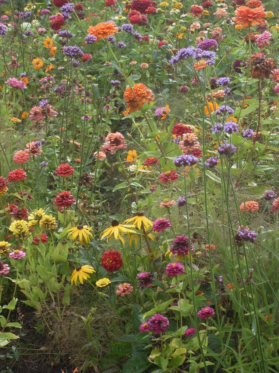 Blumen 2012-11