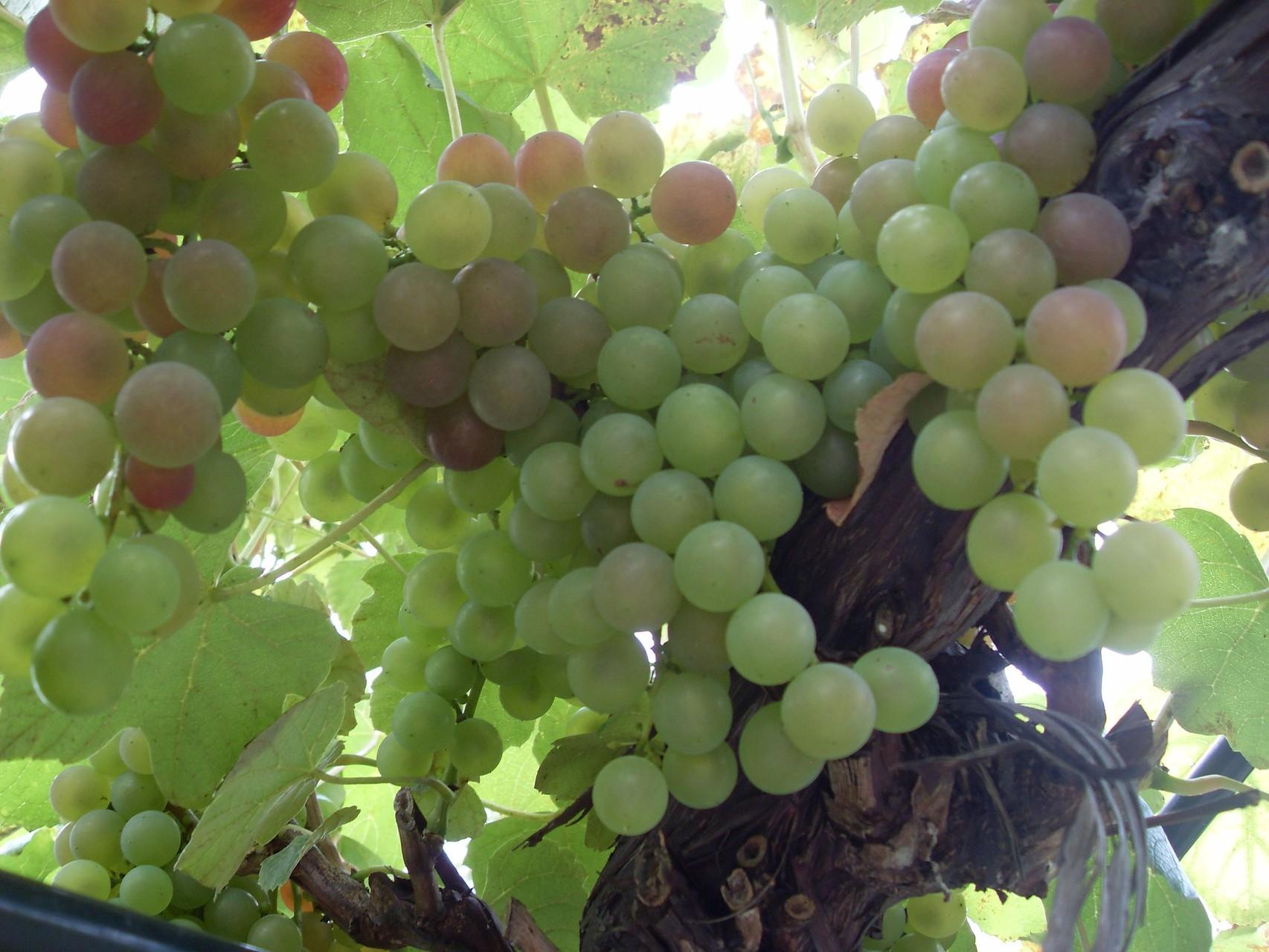 Früchte 2011-1